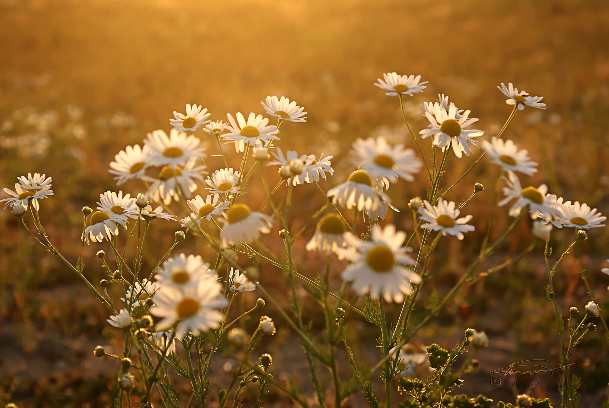 Granby Wildflowers  by KandisG