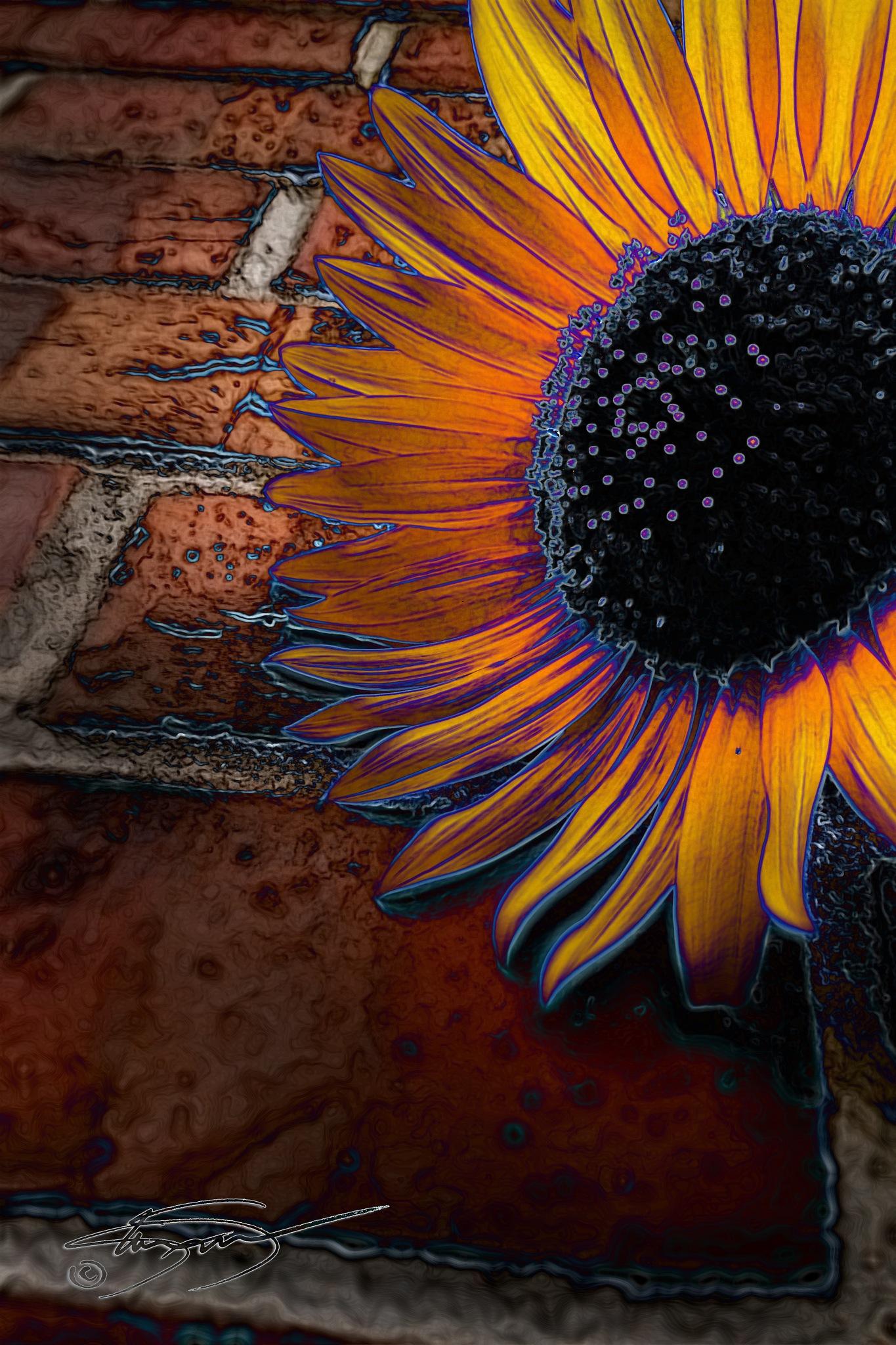 Sunflower on Brick by KandisG