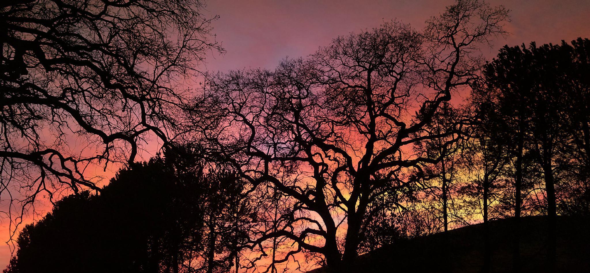 Sunset through trees by KellyDWidener