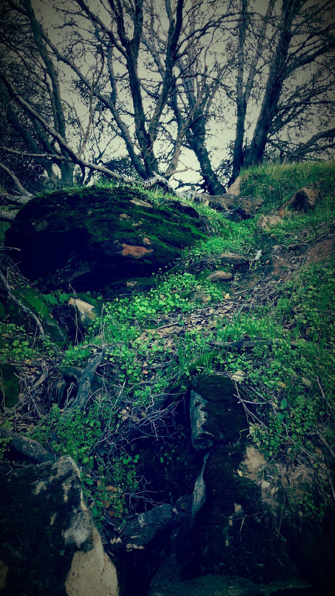 Moss by KellyDWidener