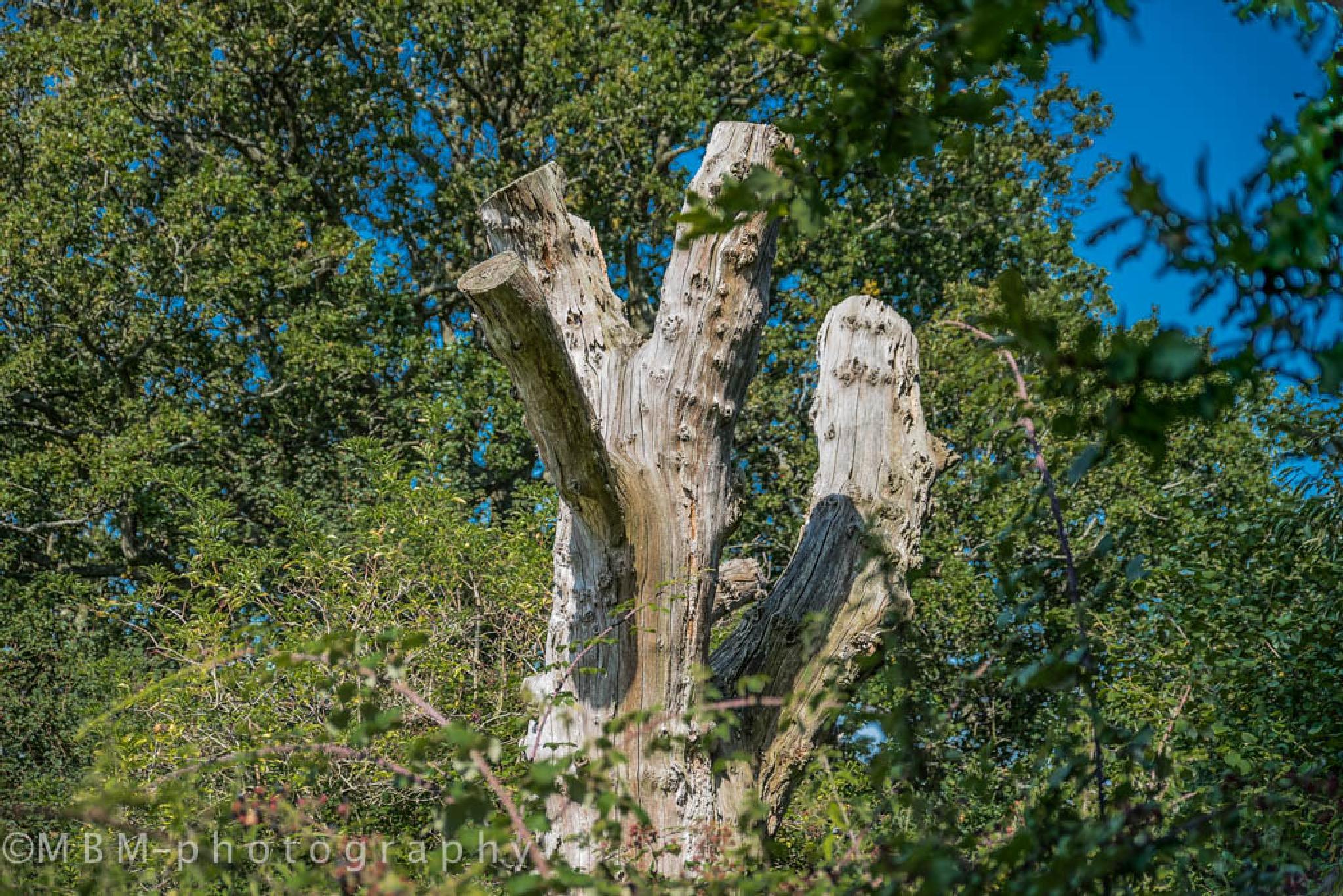 Pulborough Brooks Nature Reserve (RSPB) by Michel B