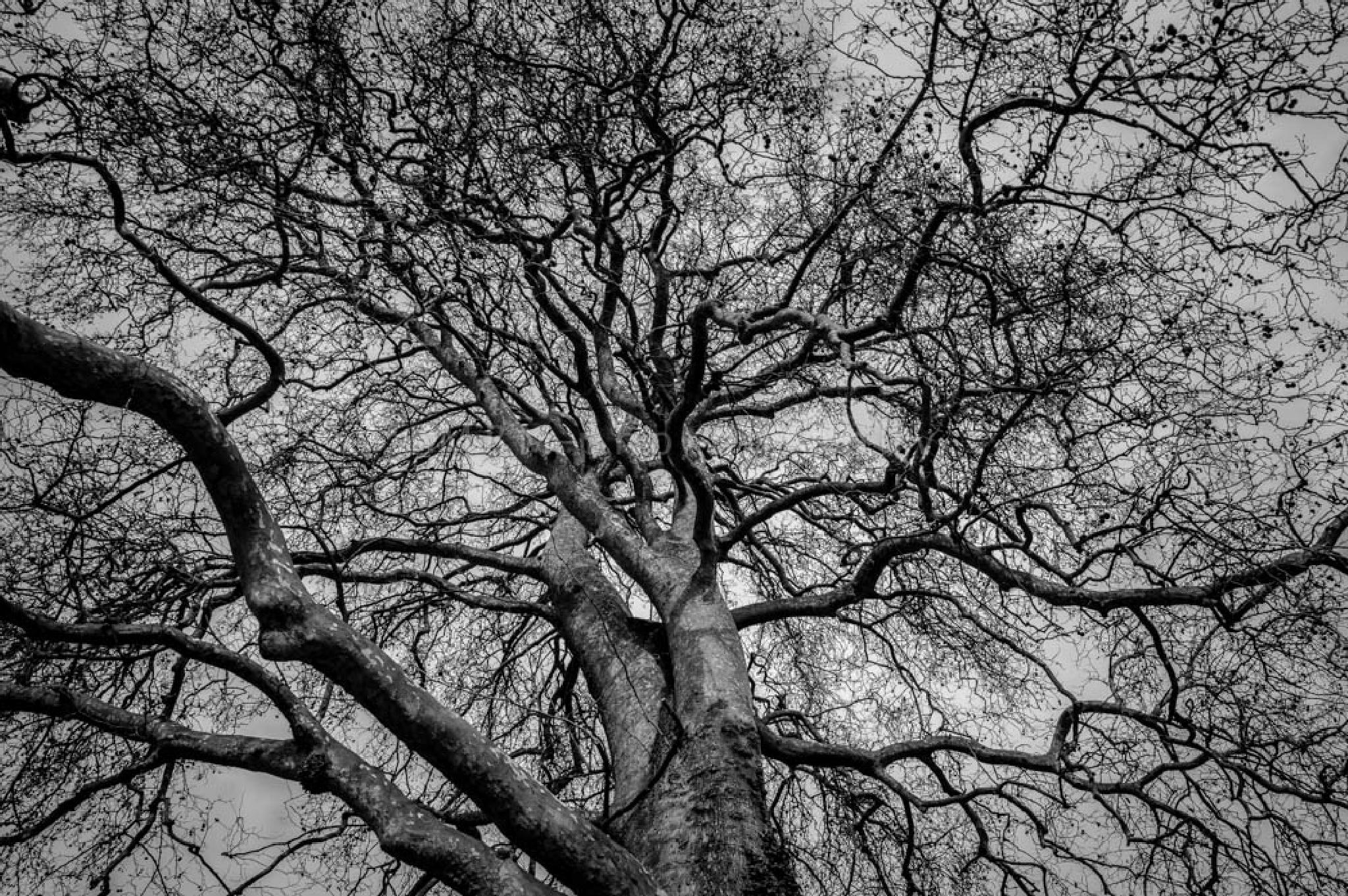 Branching Out by Michel B