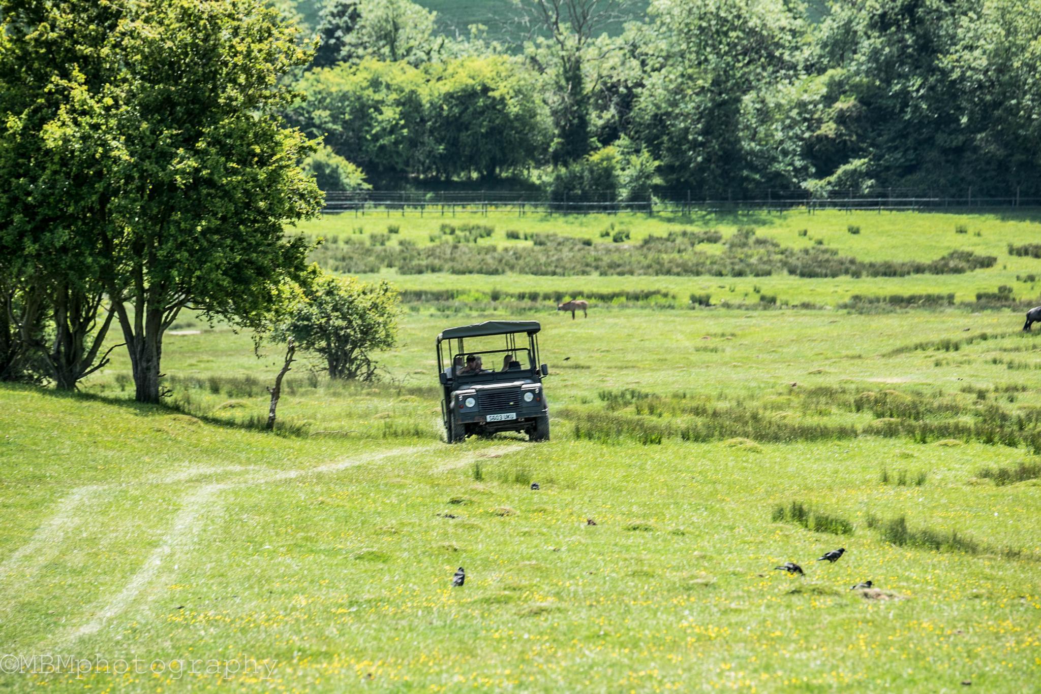 Safari Trail by Michel B
