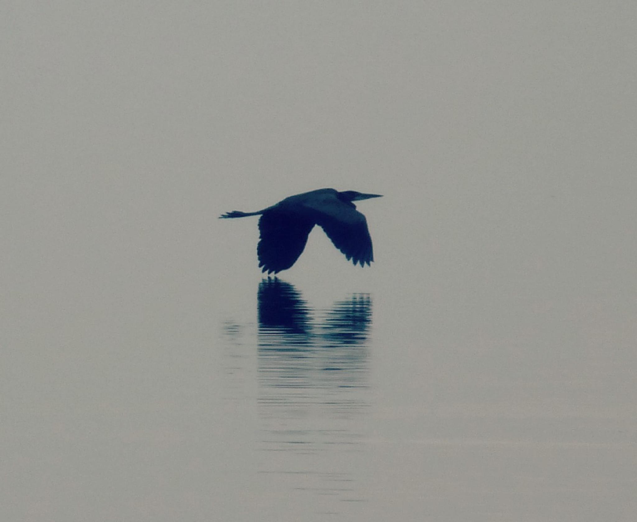 waterfowl by laurabond.shinn