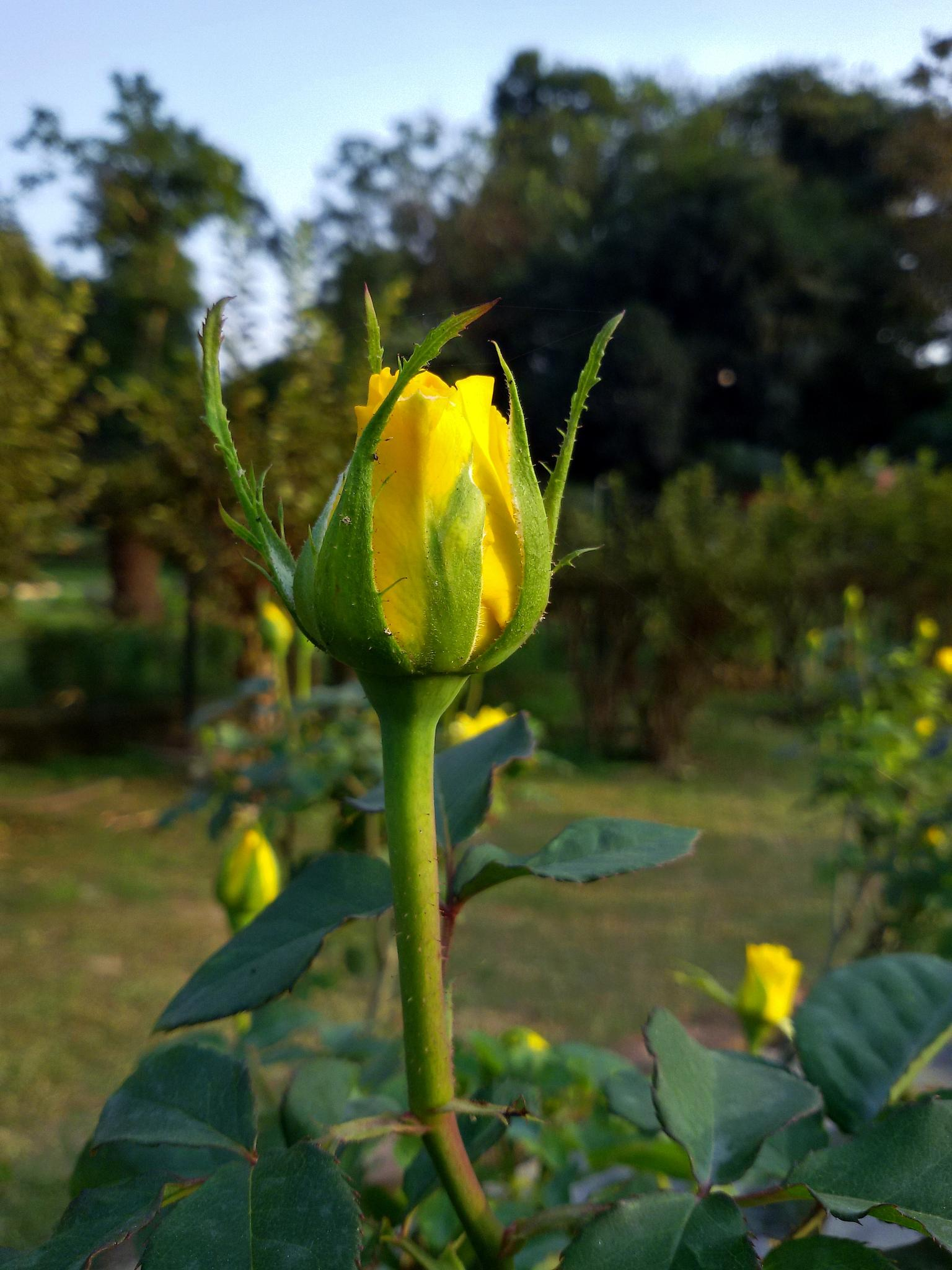 Bud by Manab Das