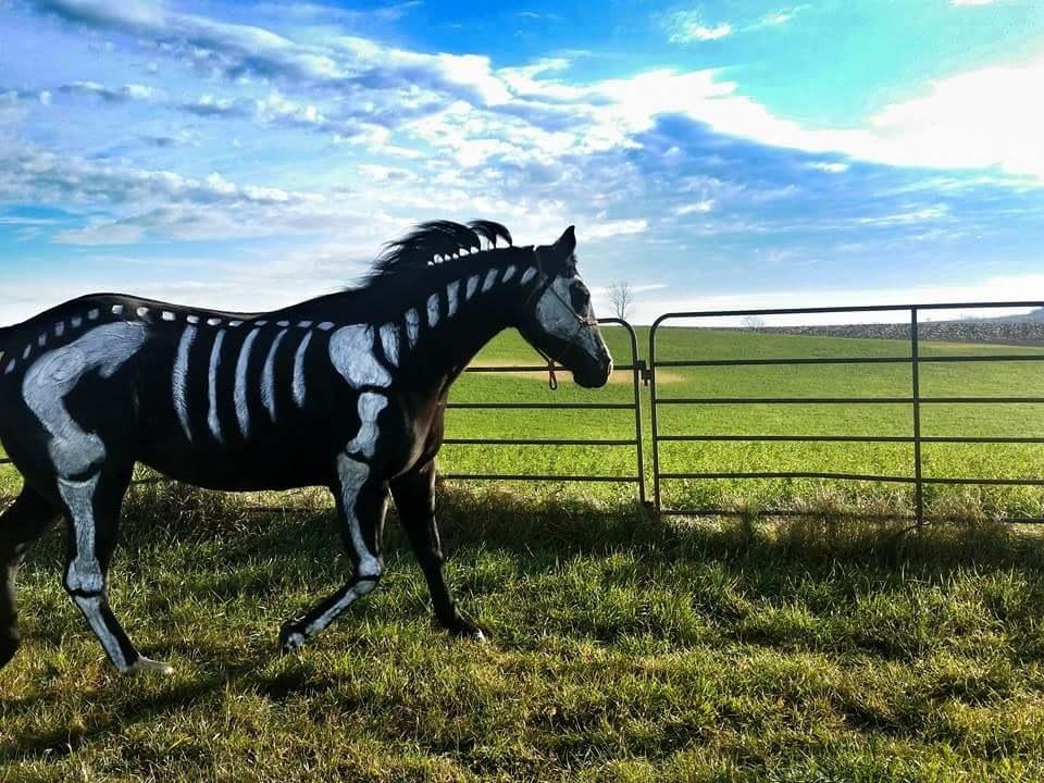 Haunted Horse by rcktgrl85