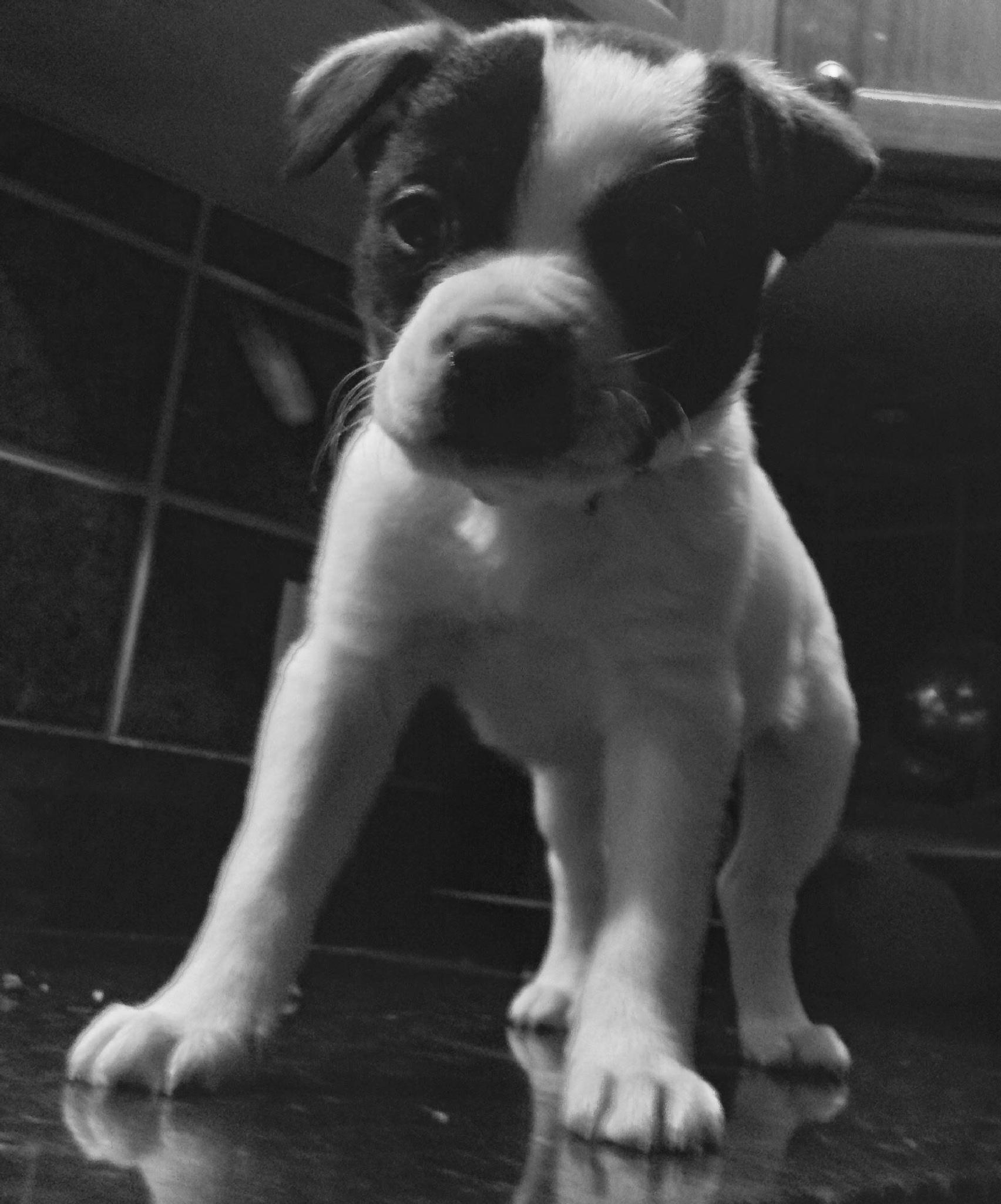 Puppy love by dianne.boyer