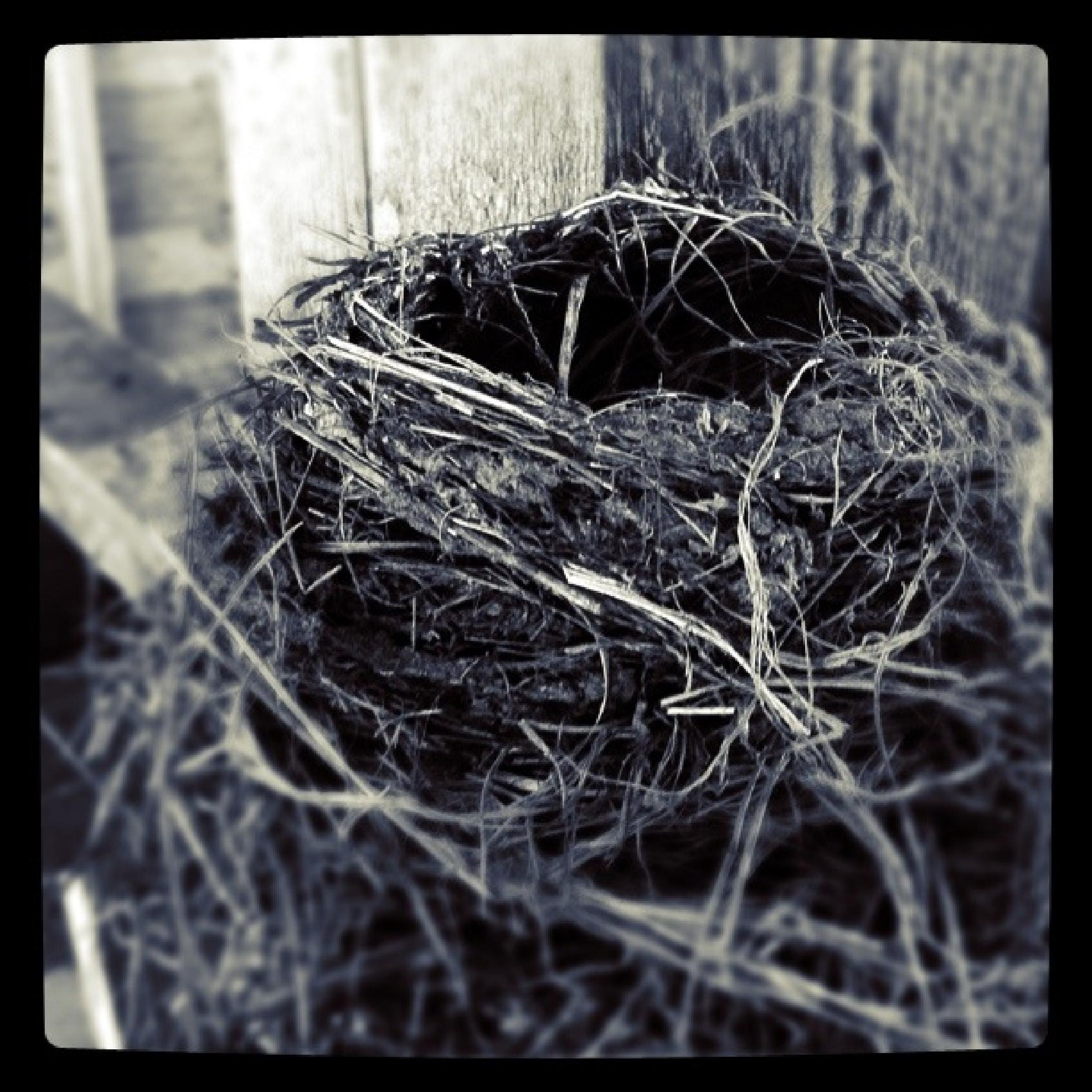 Nesting by Bryon Grove
