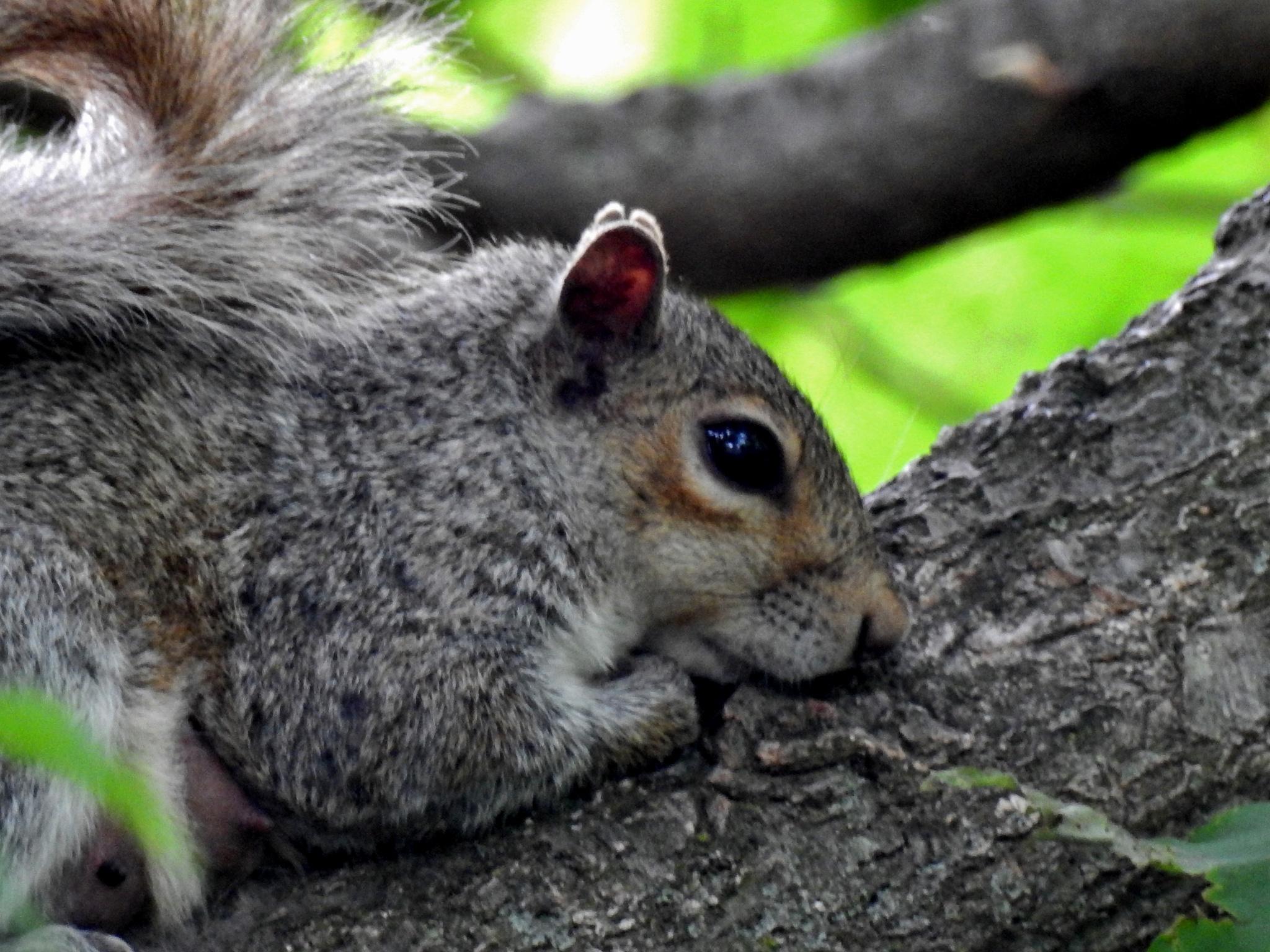 Photo in Animal #animal #squirrel #nature