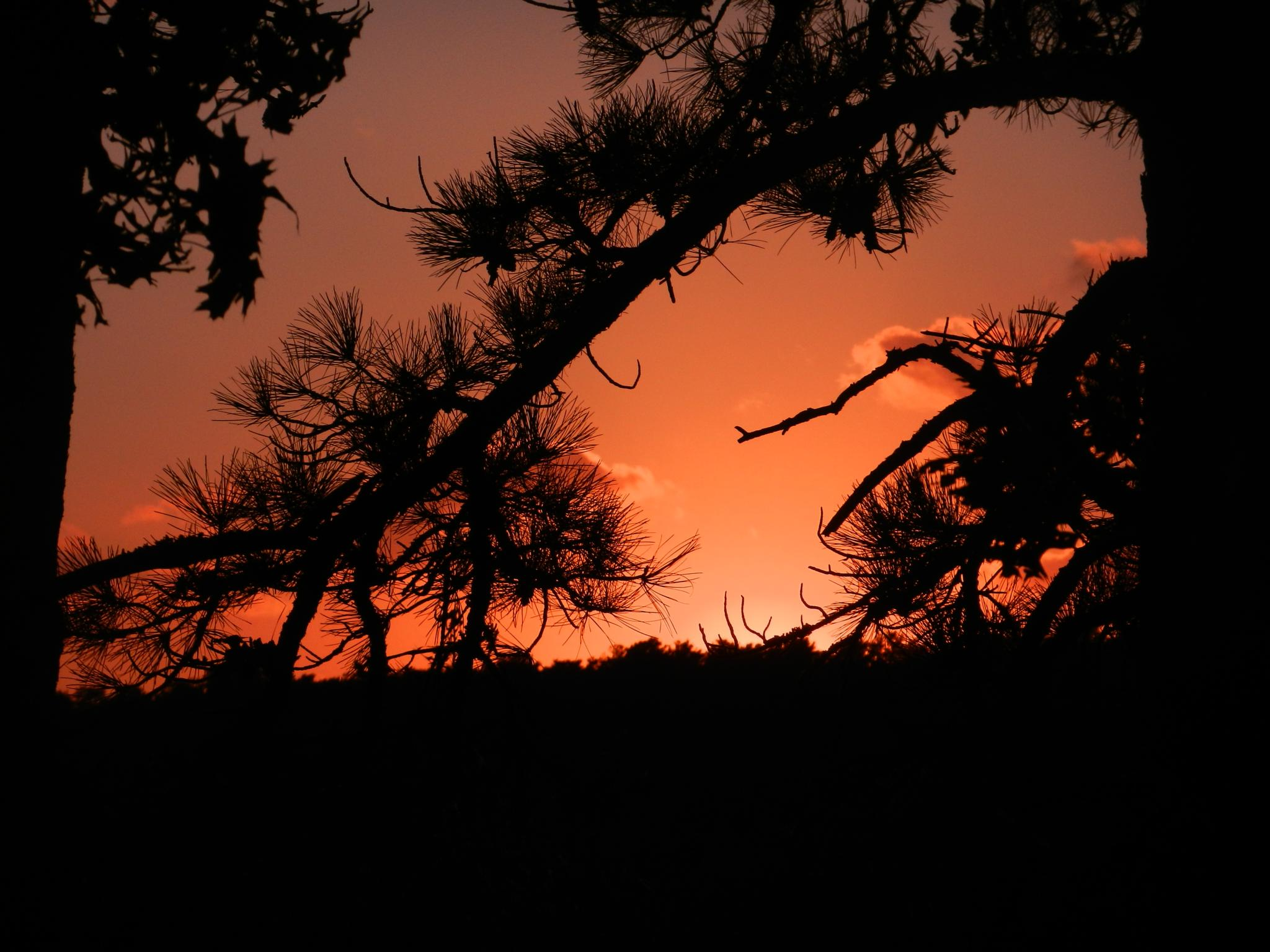 Sunset by carol.capozzi.18