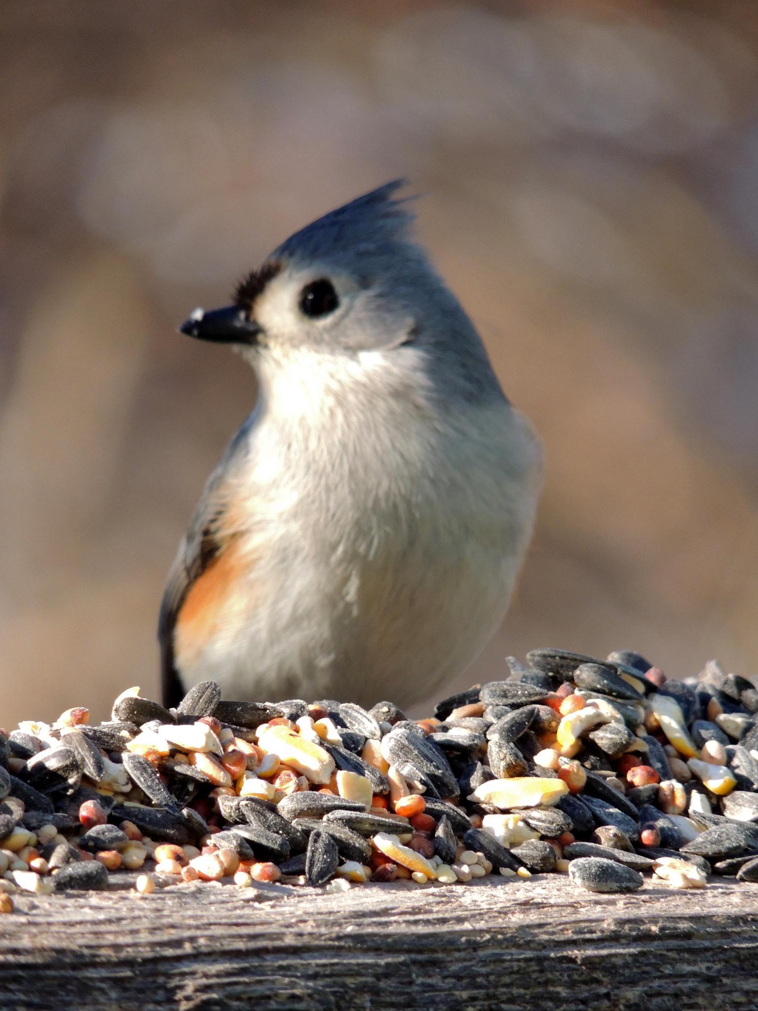 Photo in Animal #bird #animal #nature