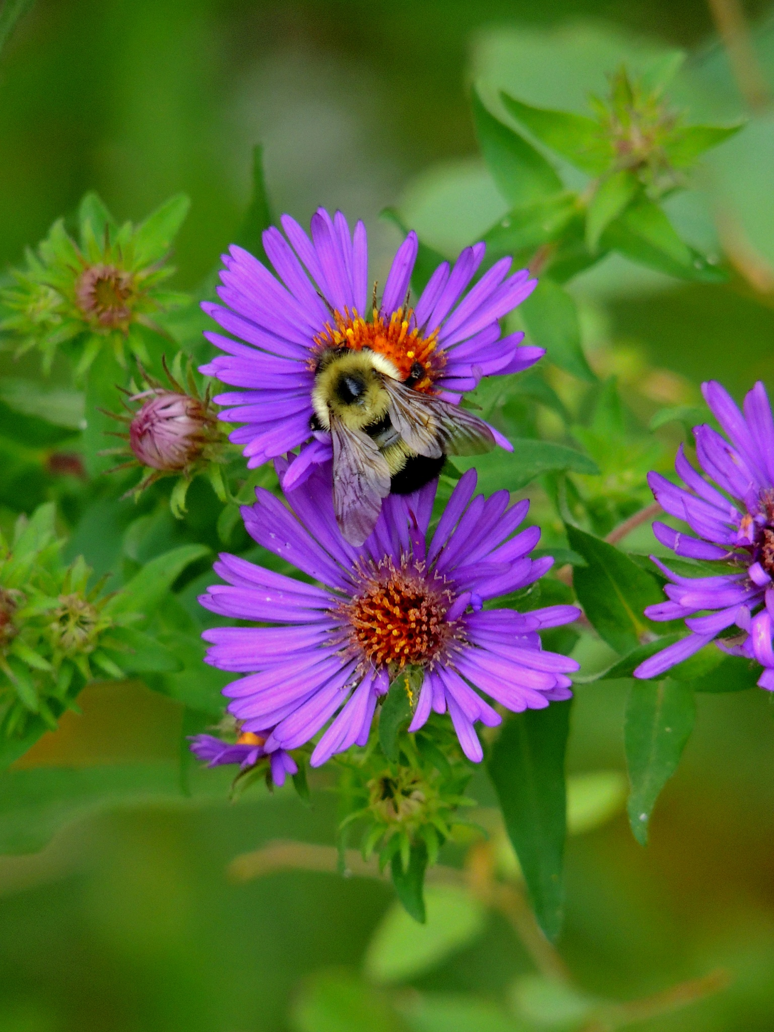 Busy Bee by carol.capozzi.18