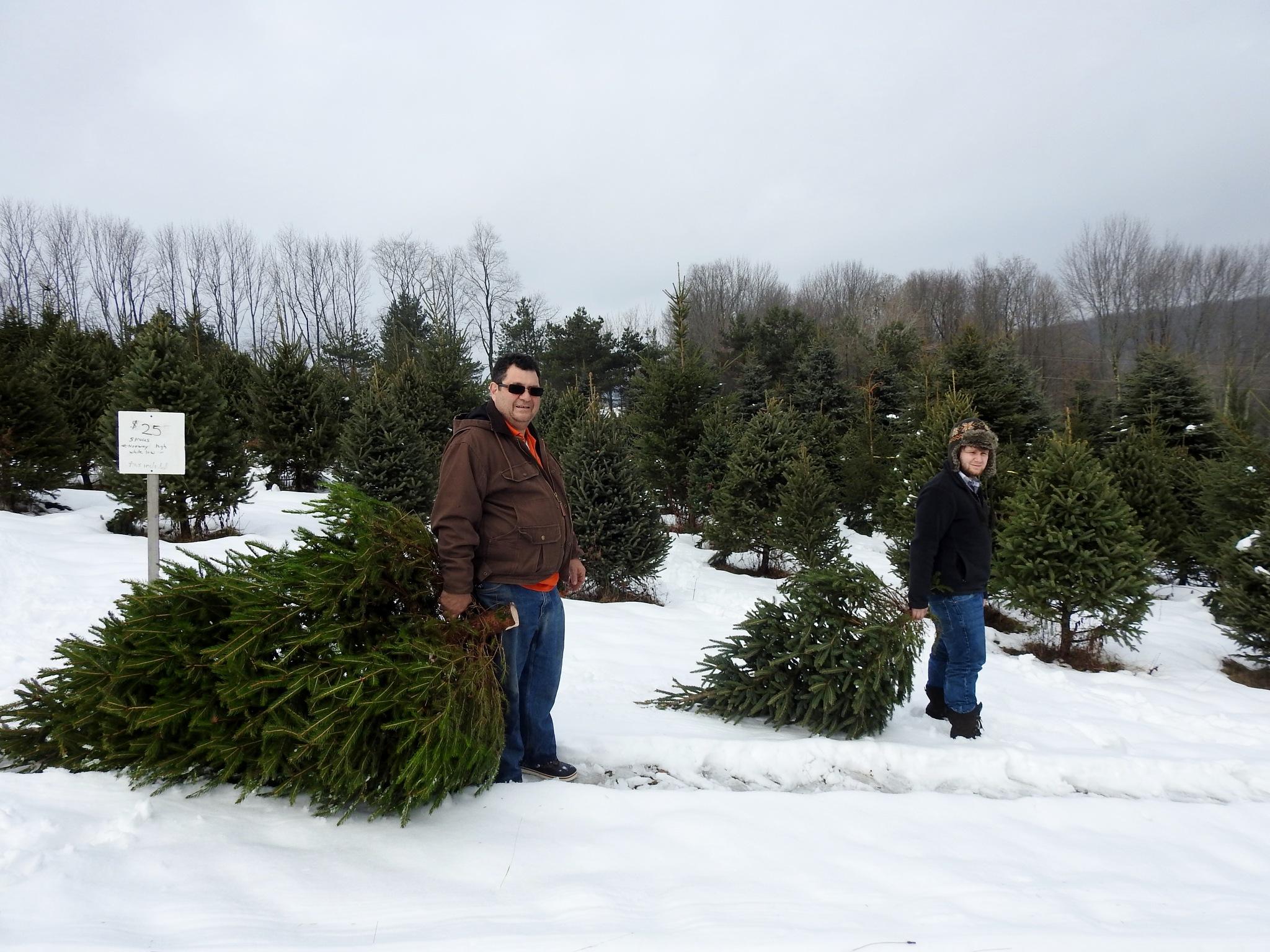 Bringing home the tree by carol.capozzi.18