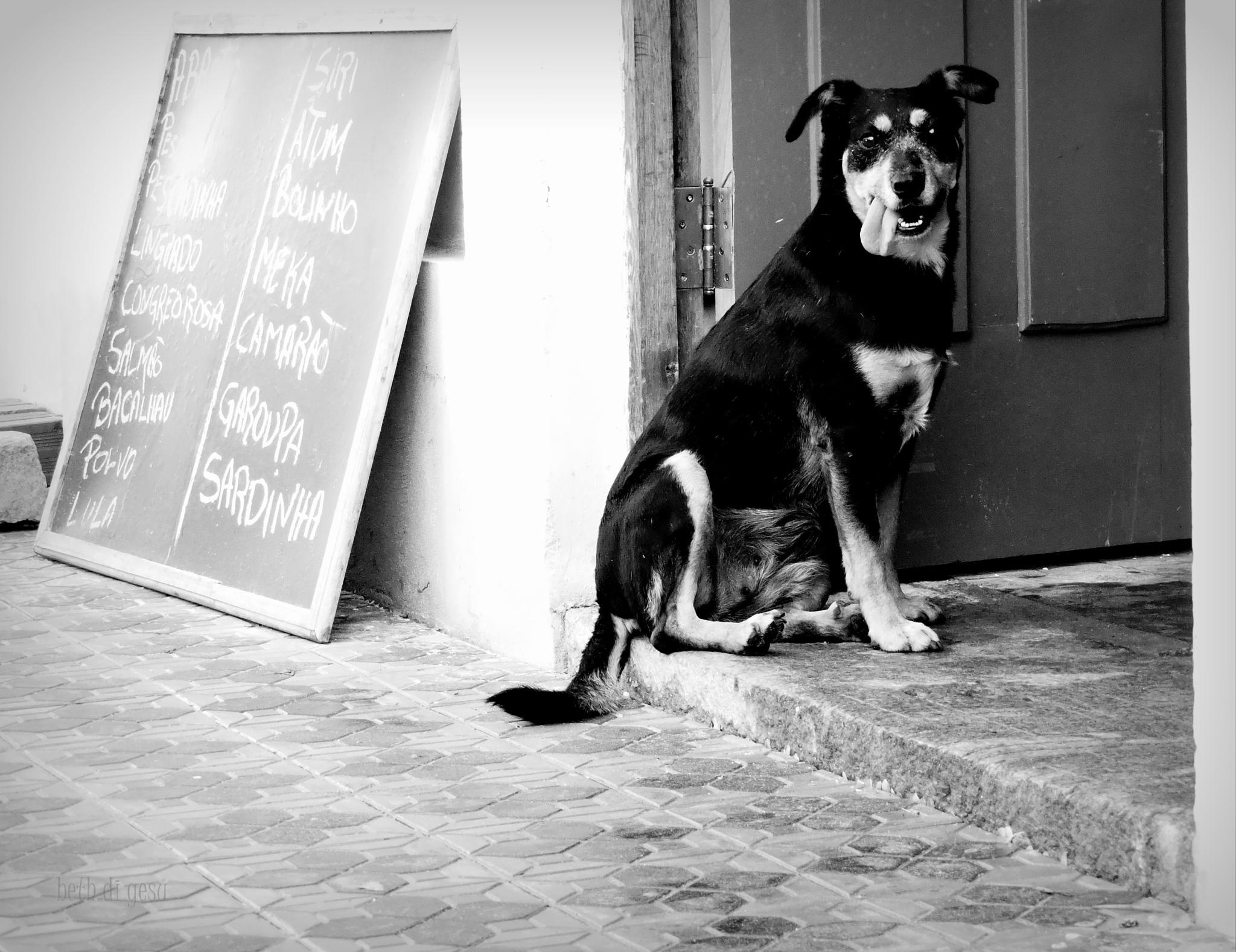The Dog by BETH DI GESU