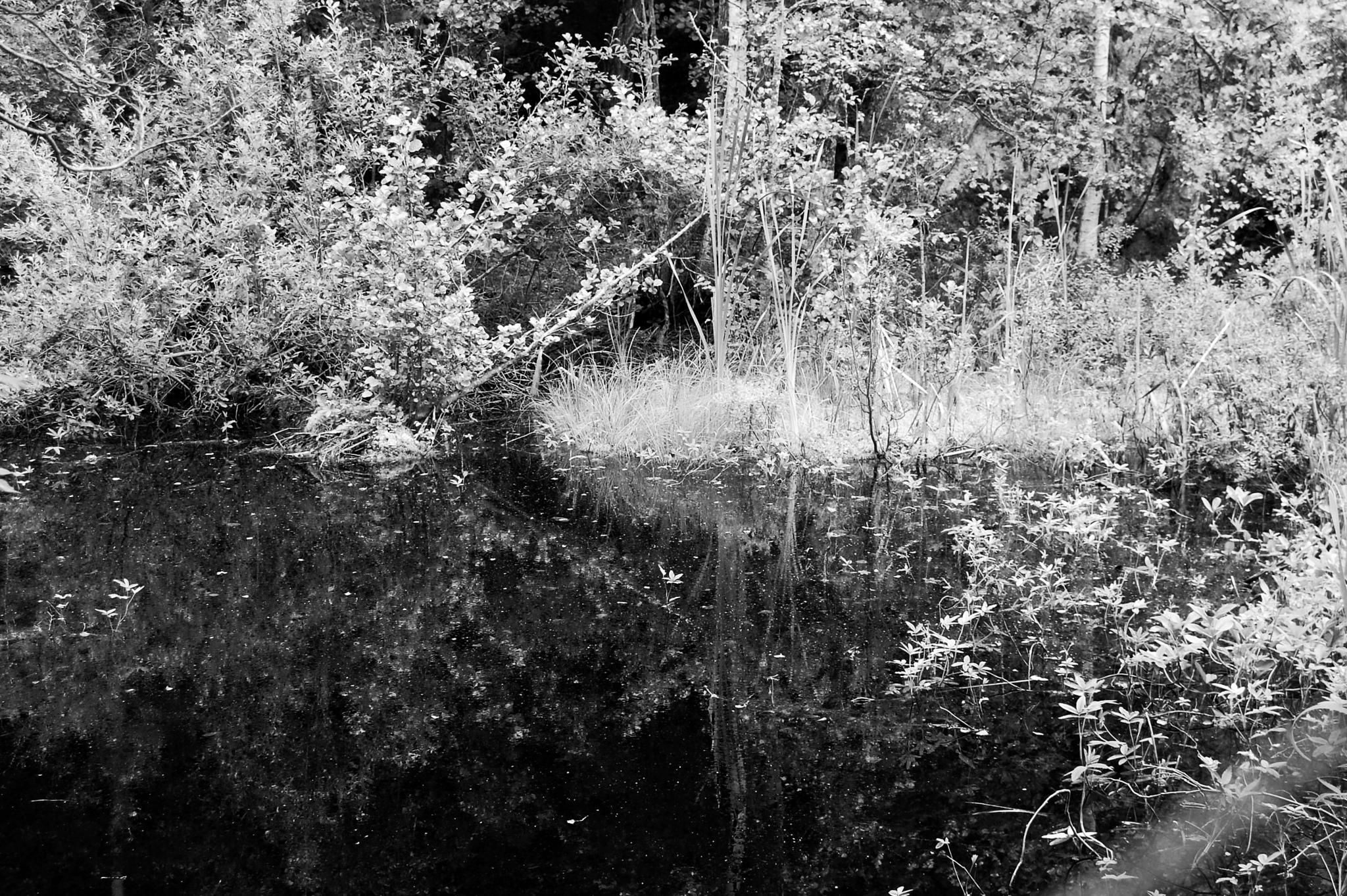 Reflection in dark water,B&W by lillemor.ekstrom ek