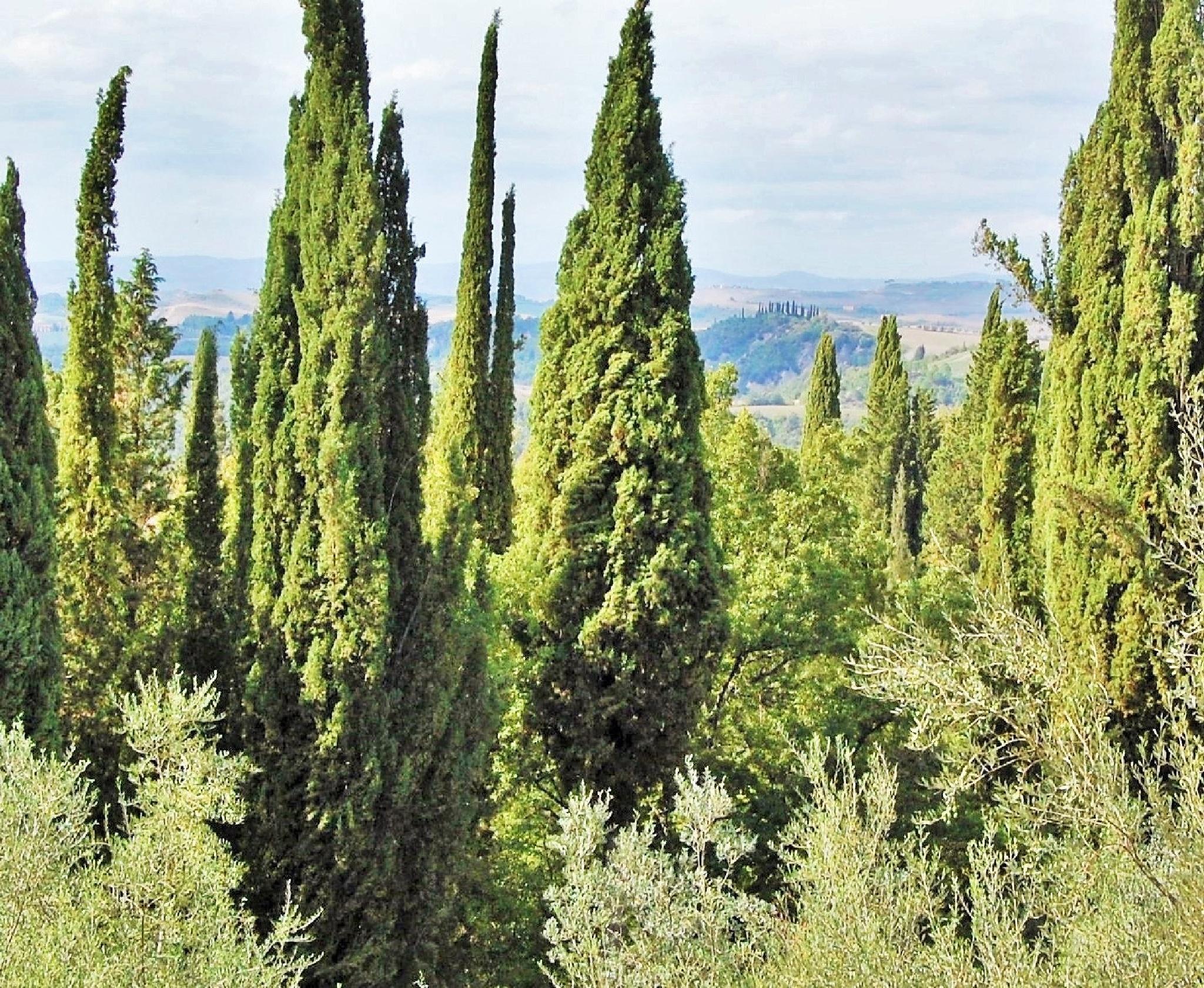 cypres and oliv by lillemor.ekstrom ek
