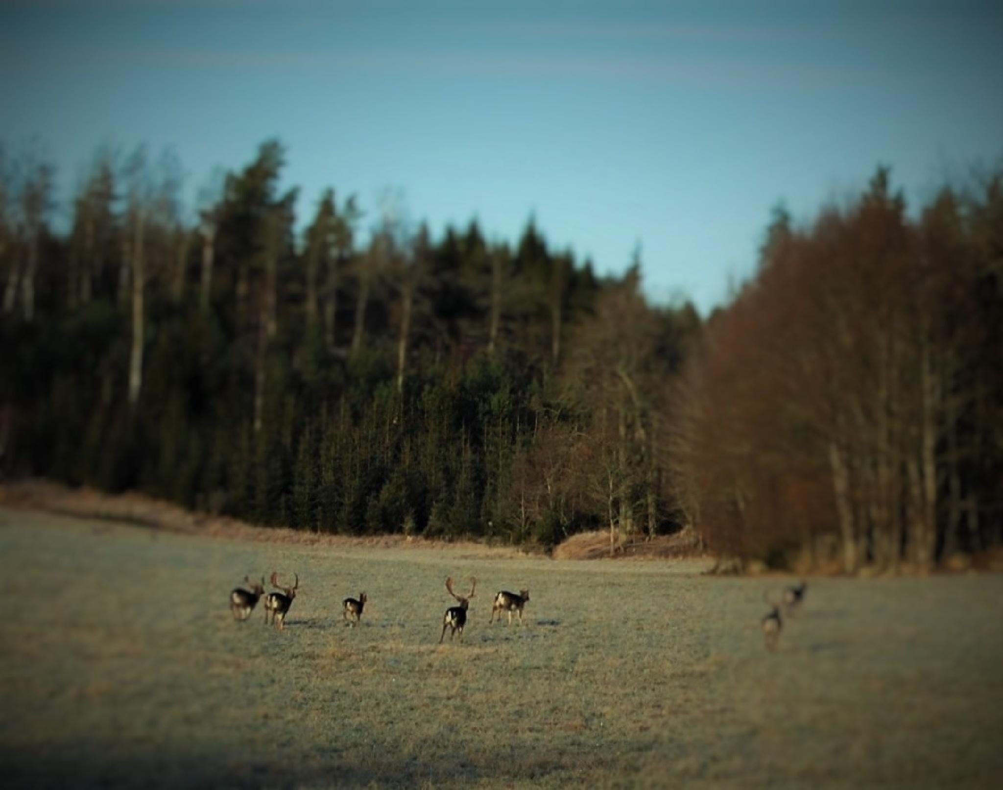Whay are the runing away! by lillemor.ekstrom ek