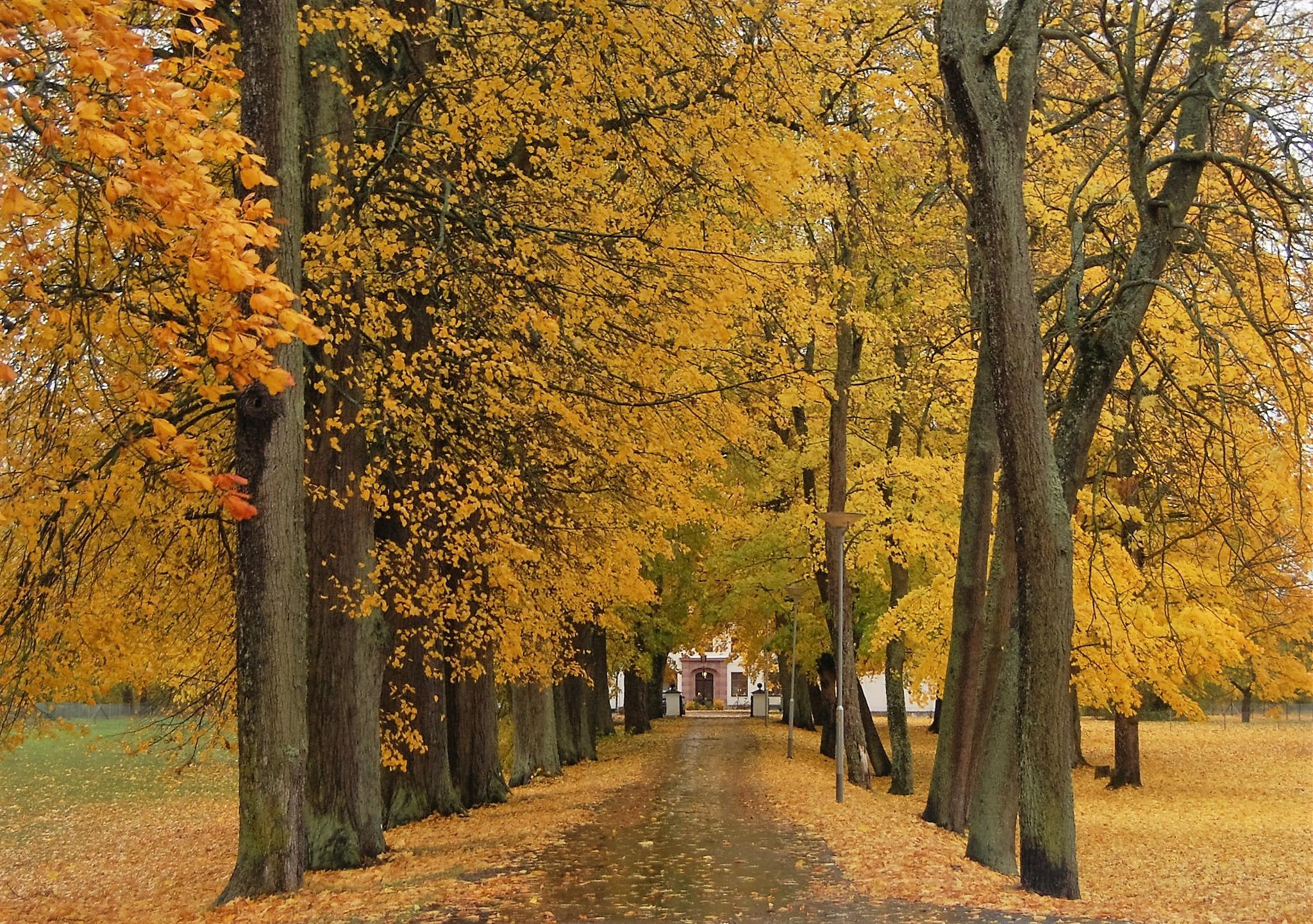 Autumn by lillemor.ekstrom ek