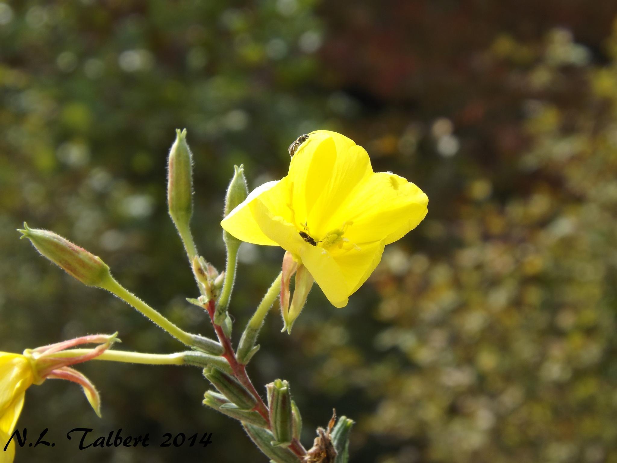 Little Yellow Flower by Nan Talbert