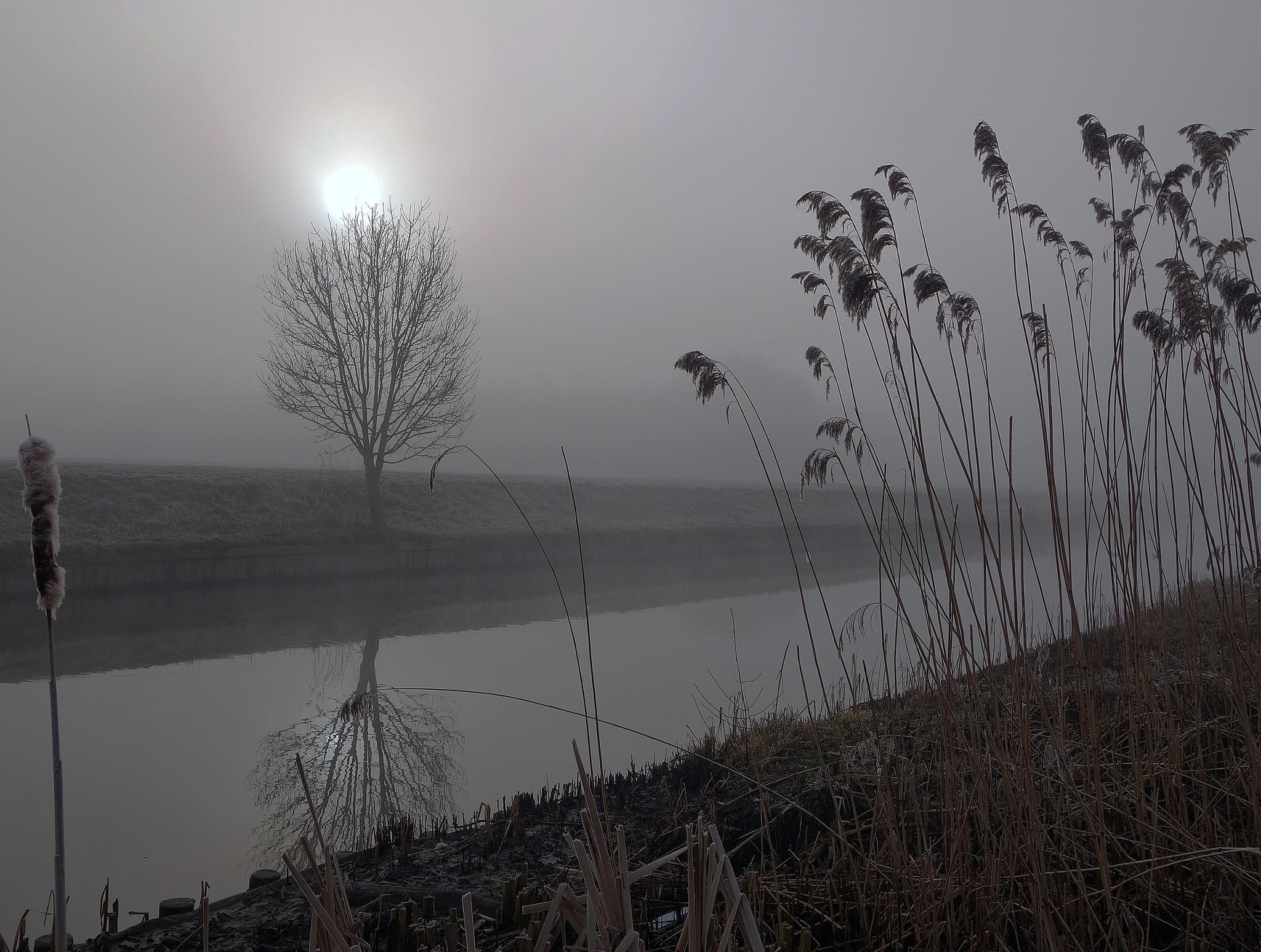 Foggy day in Odijk by hugodejong35