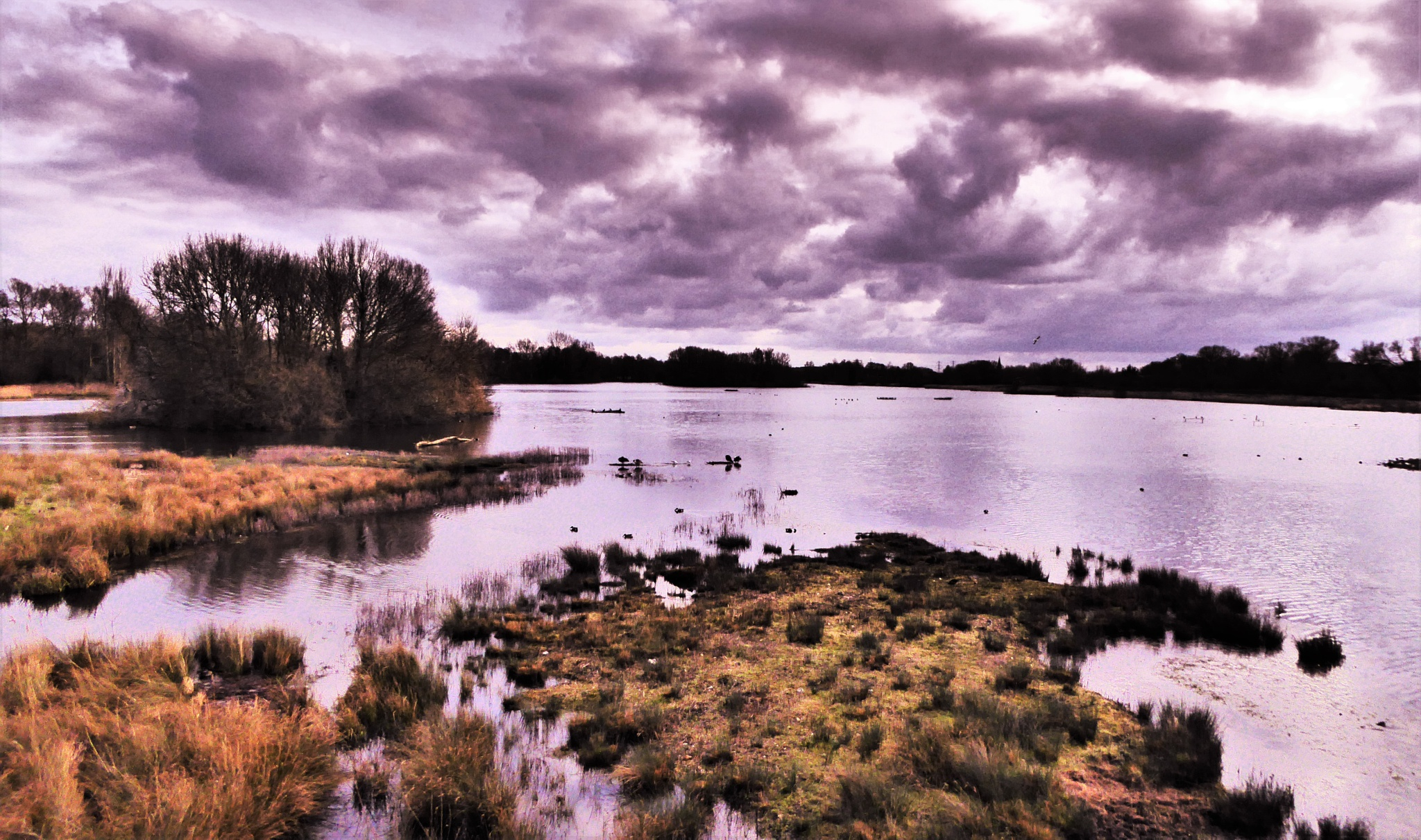 Amwell Nature Reserve 2 by Rom Pasika