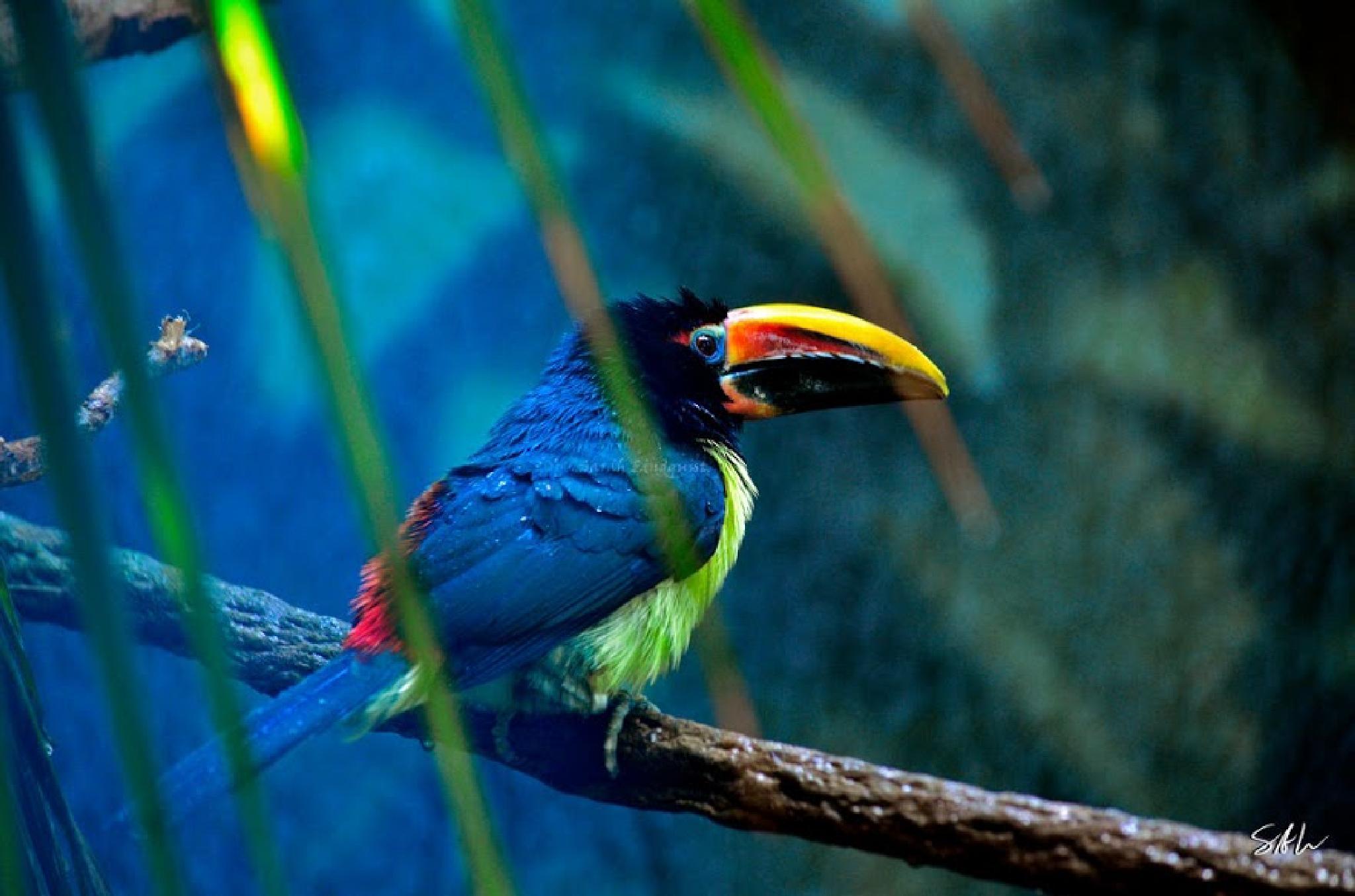 Bird by Reza Siddique