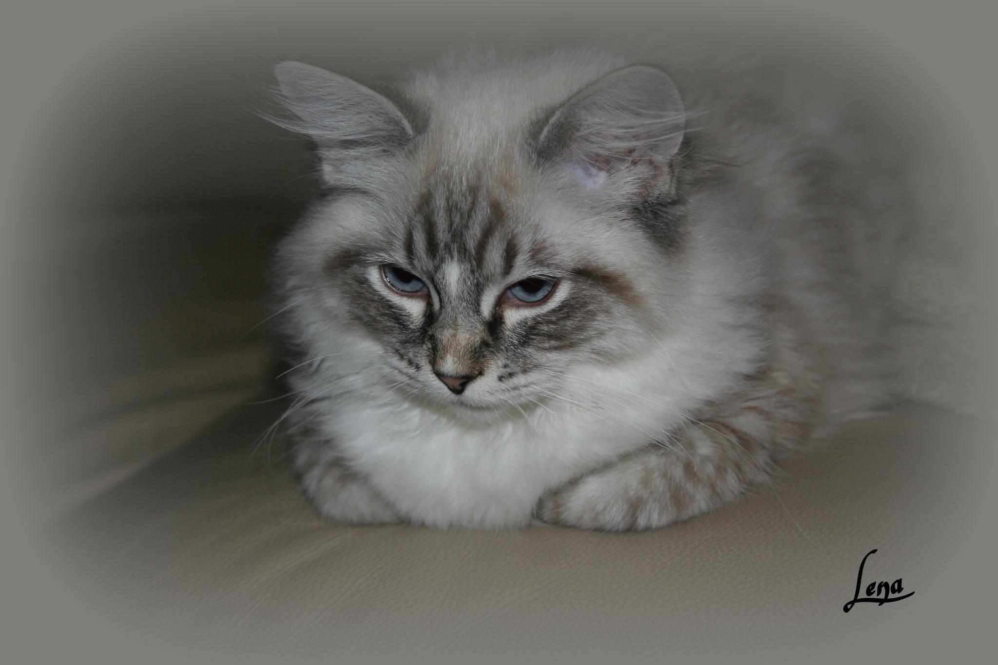 Katten by Lena