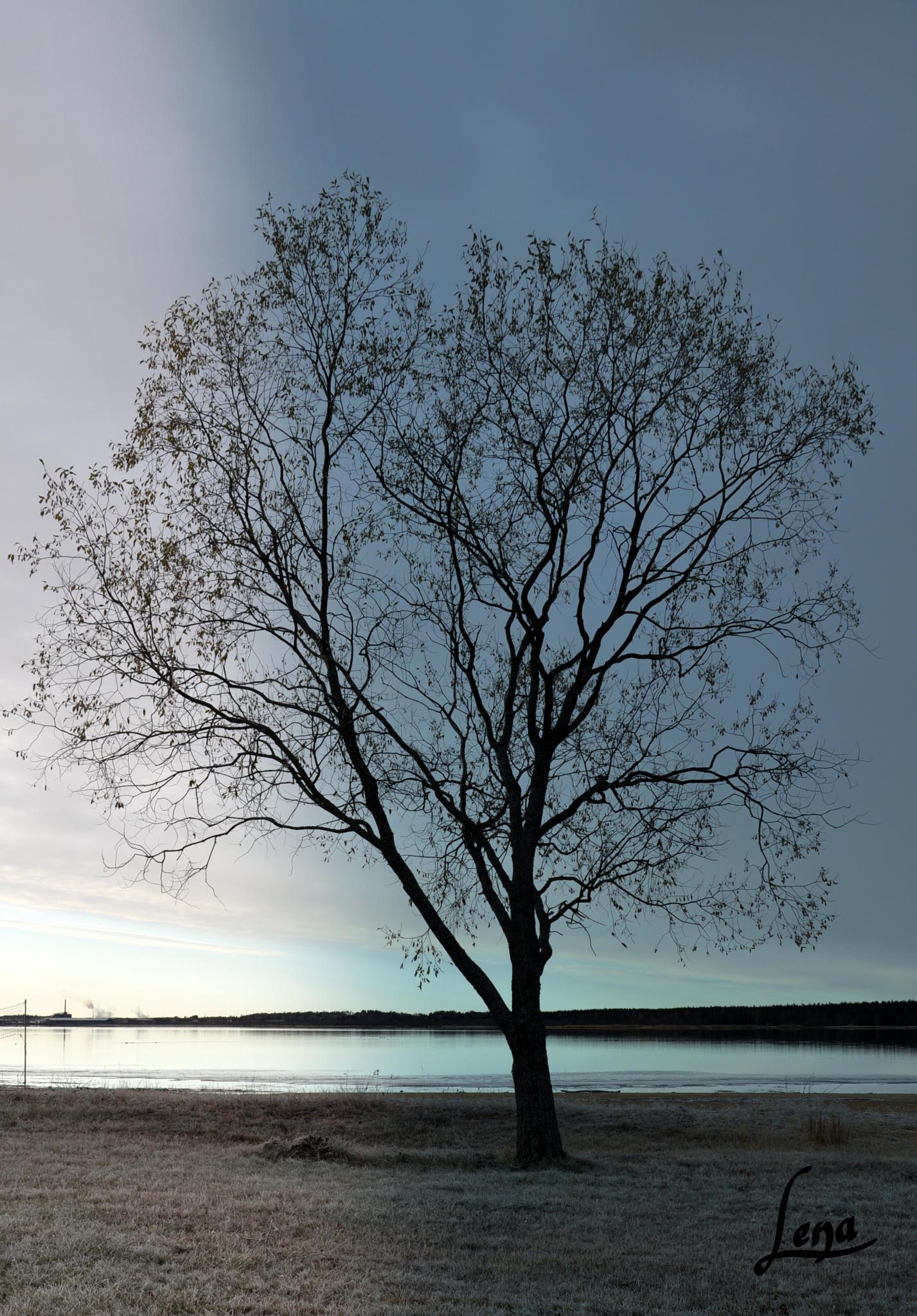 rövika träd by Lena
