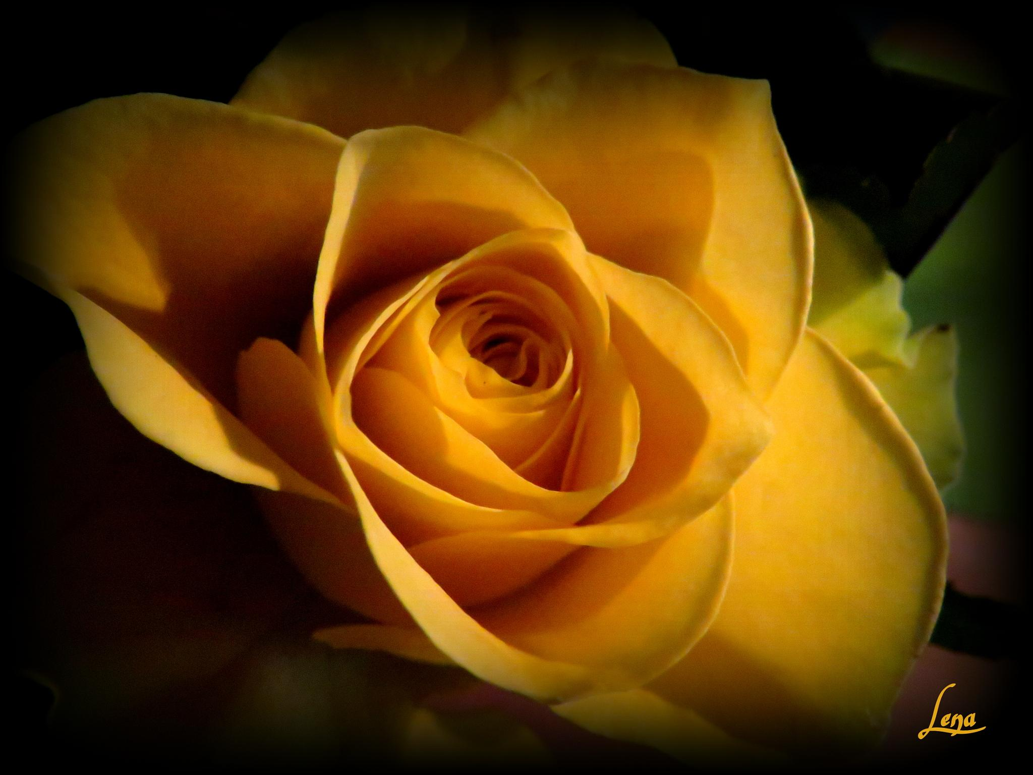 Yellow by Lena