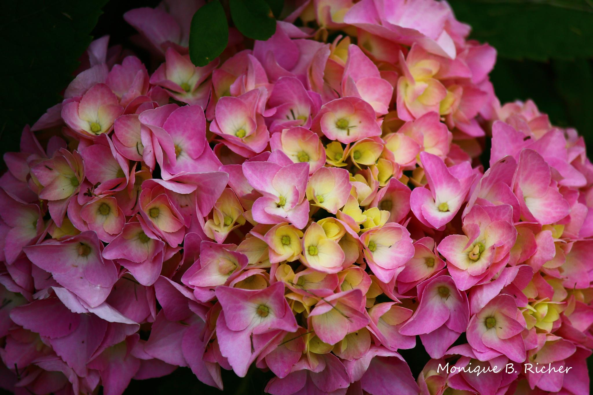 Pink and Yellow by ~Unieke Photography~