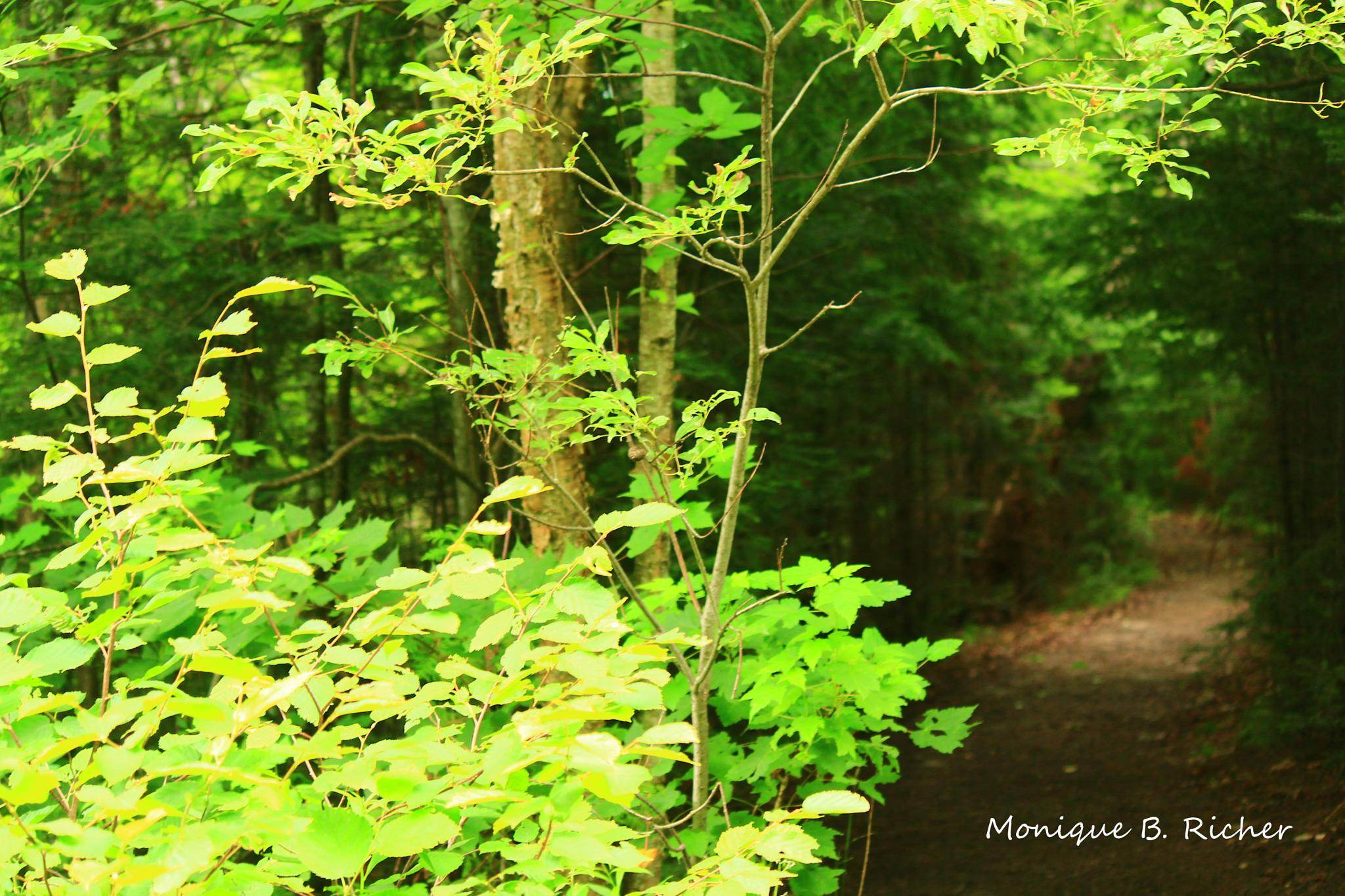 Pathway in Back by ~Unieke Photography~