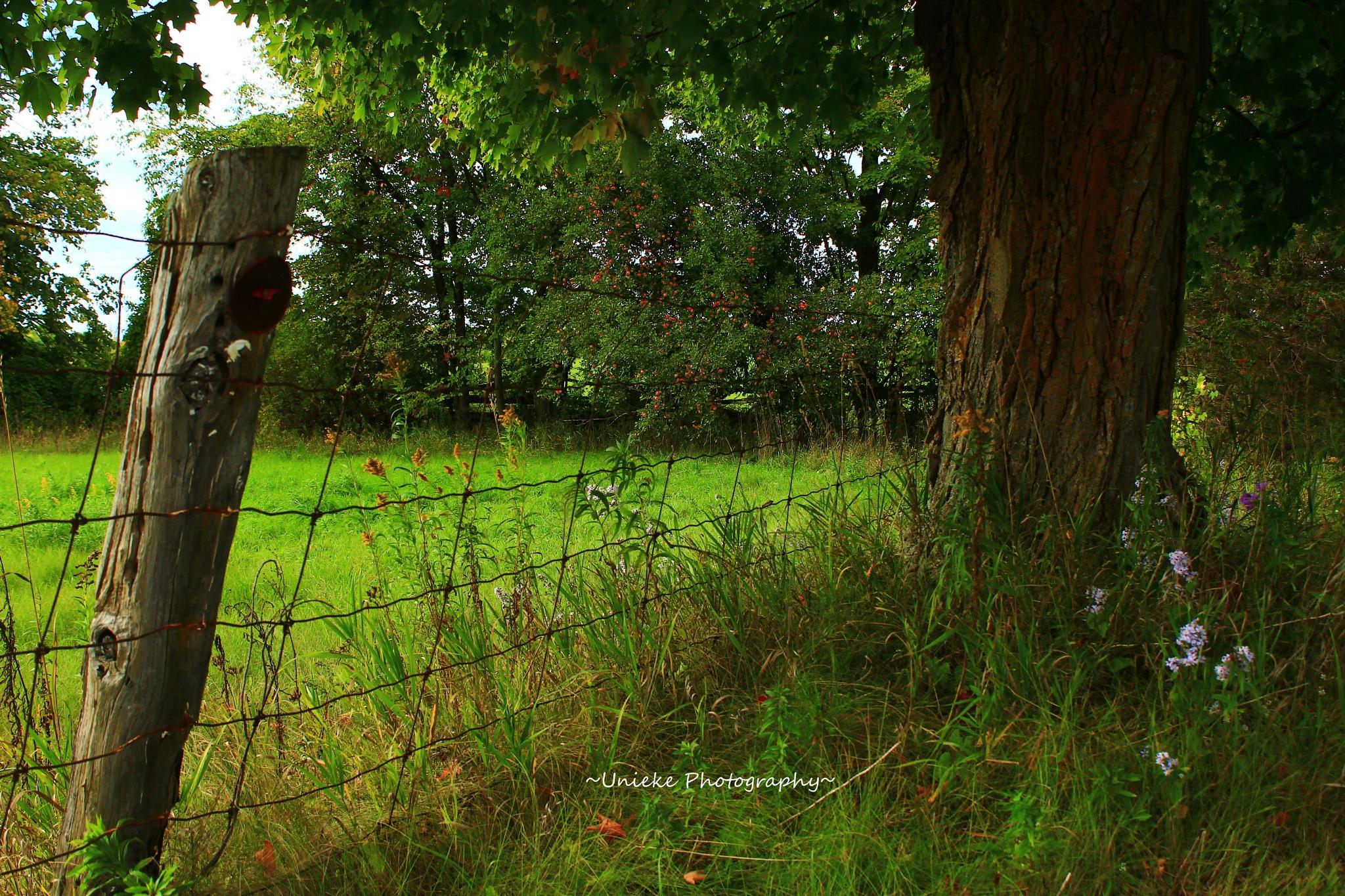 Farm Fence by ~Unieke Photography~