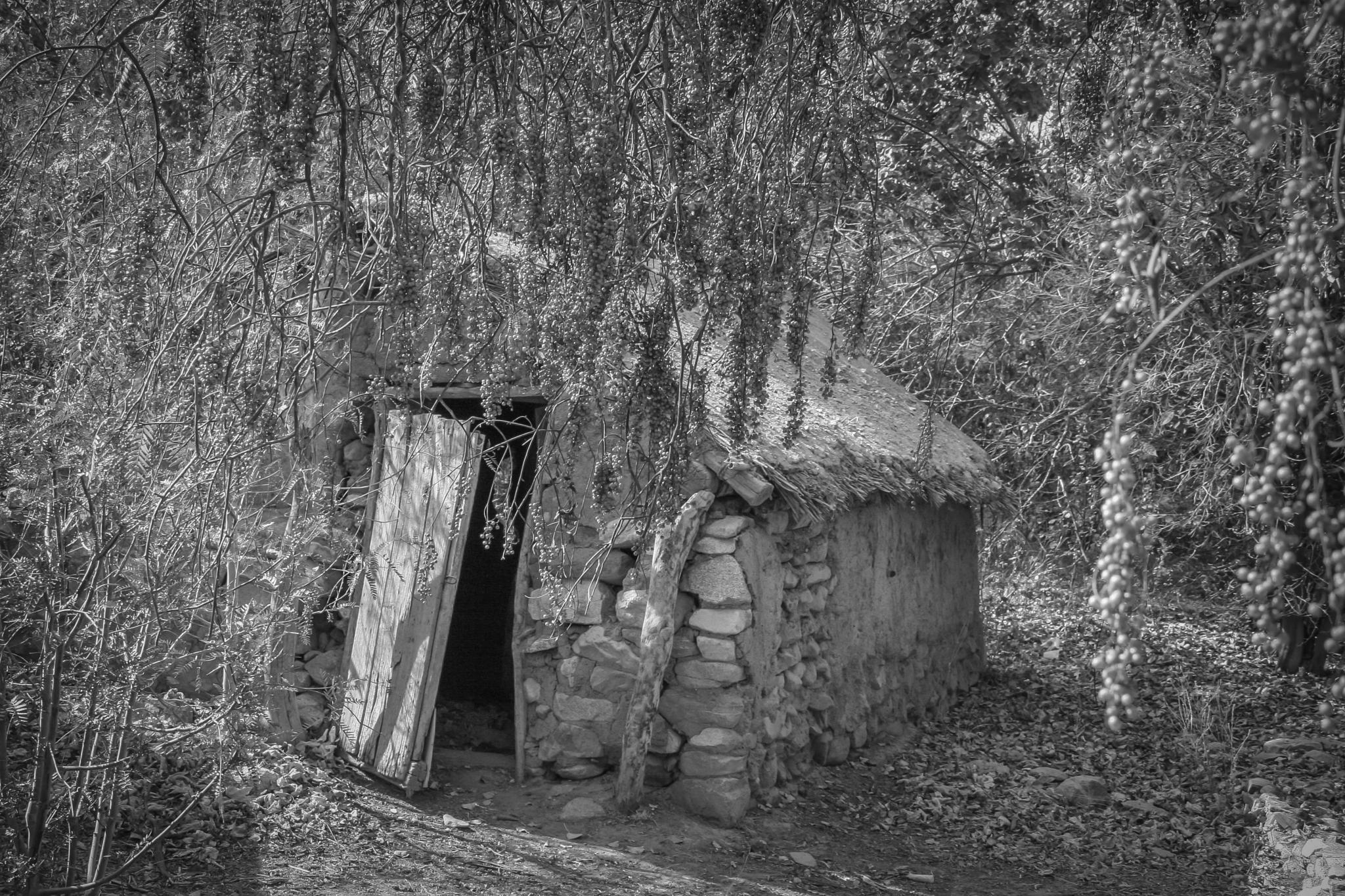 The Hidden Cottage - Watch The Dwarfs by FlaviuCodorean