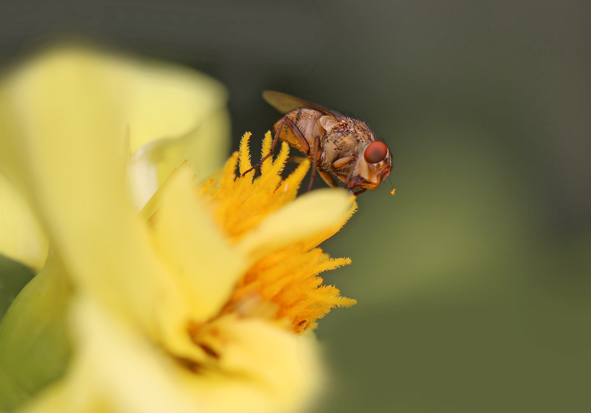 Visitor to my yellow flower by susan.burger.10