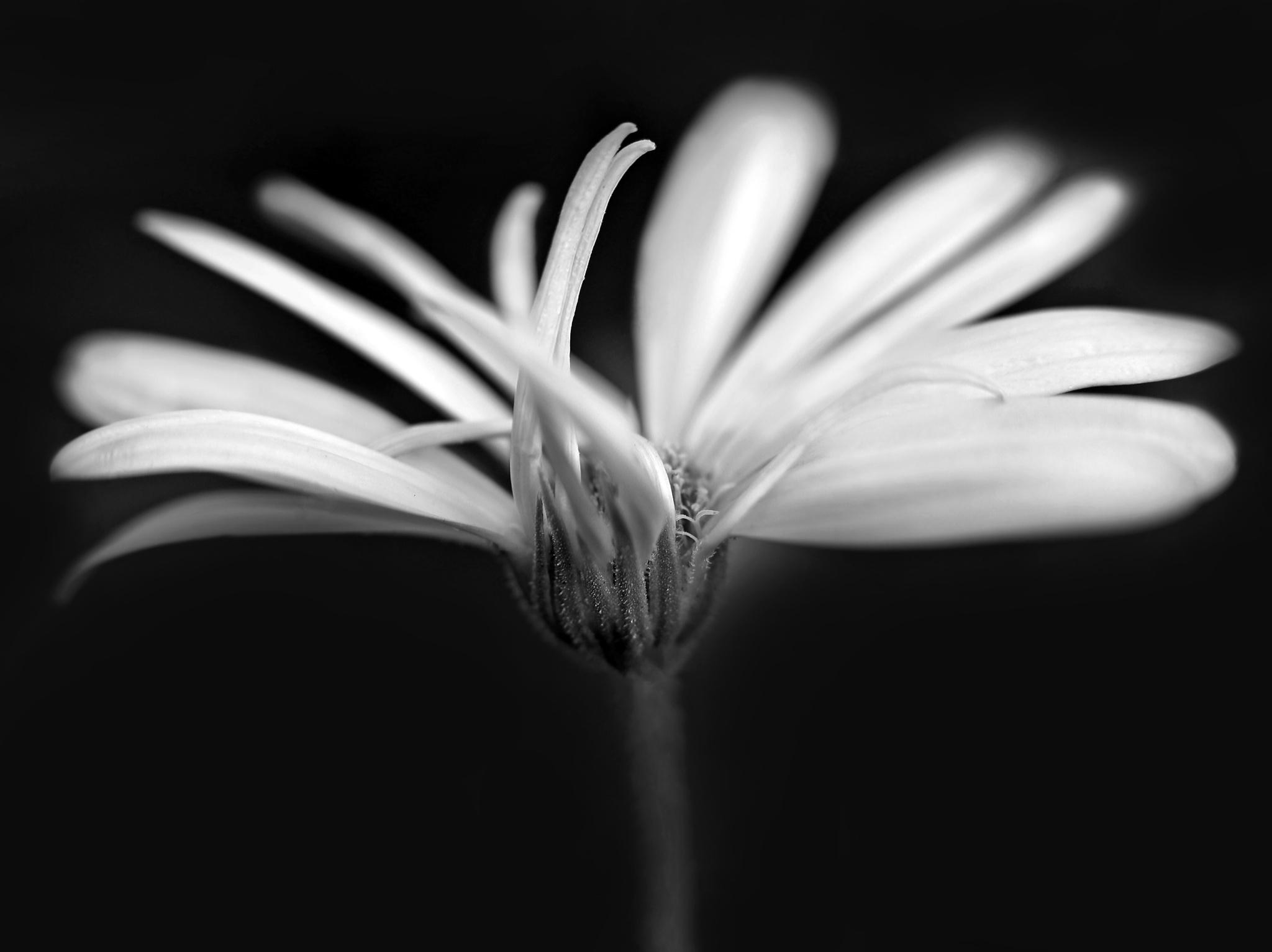 Flowers 098 by susan.burger.10