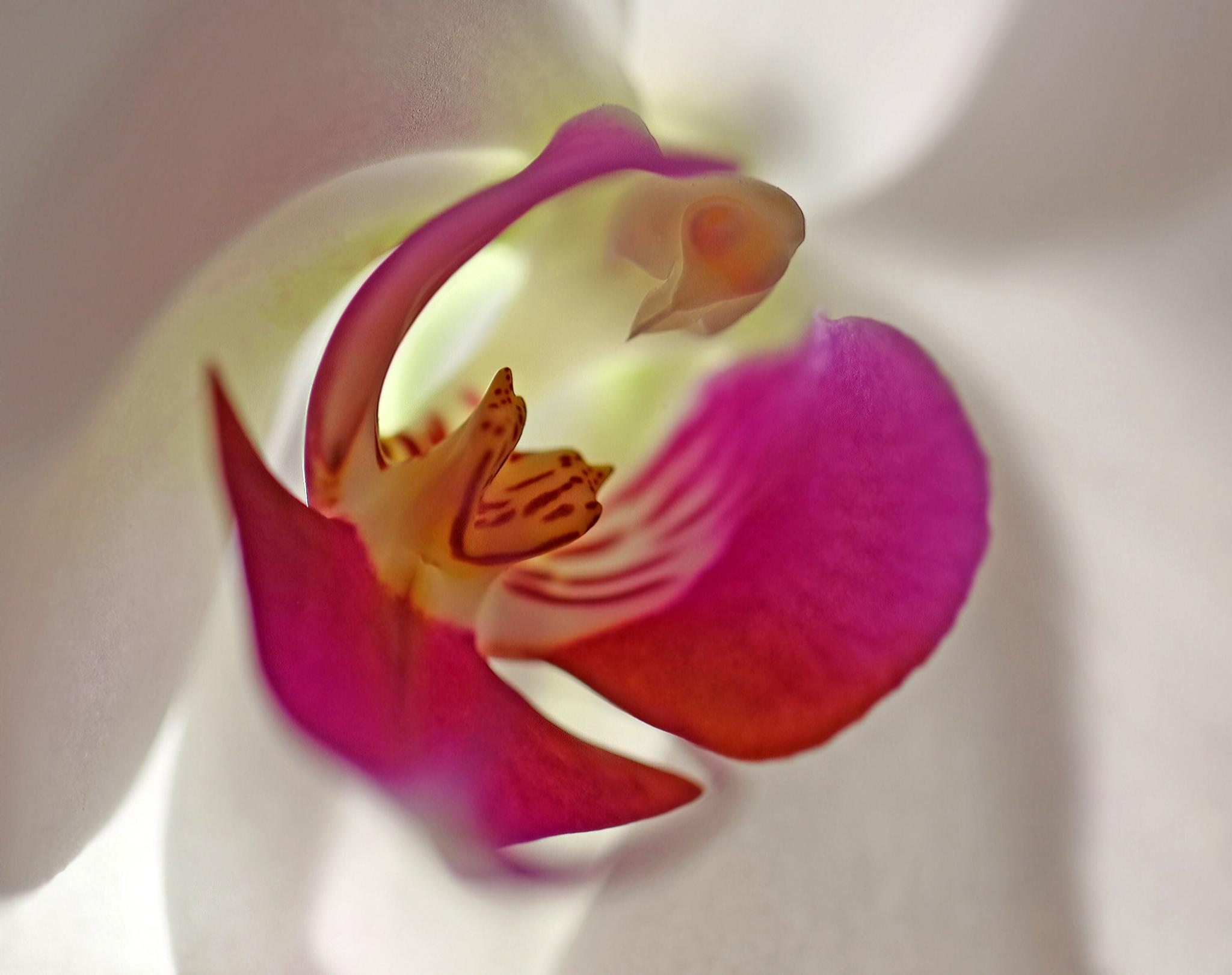 Orchid  by susan.burger.10