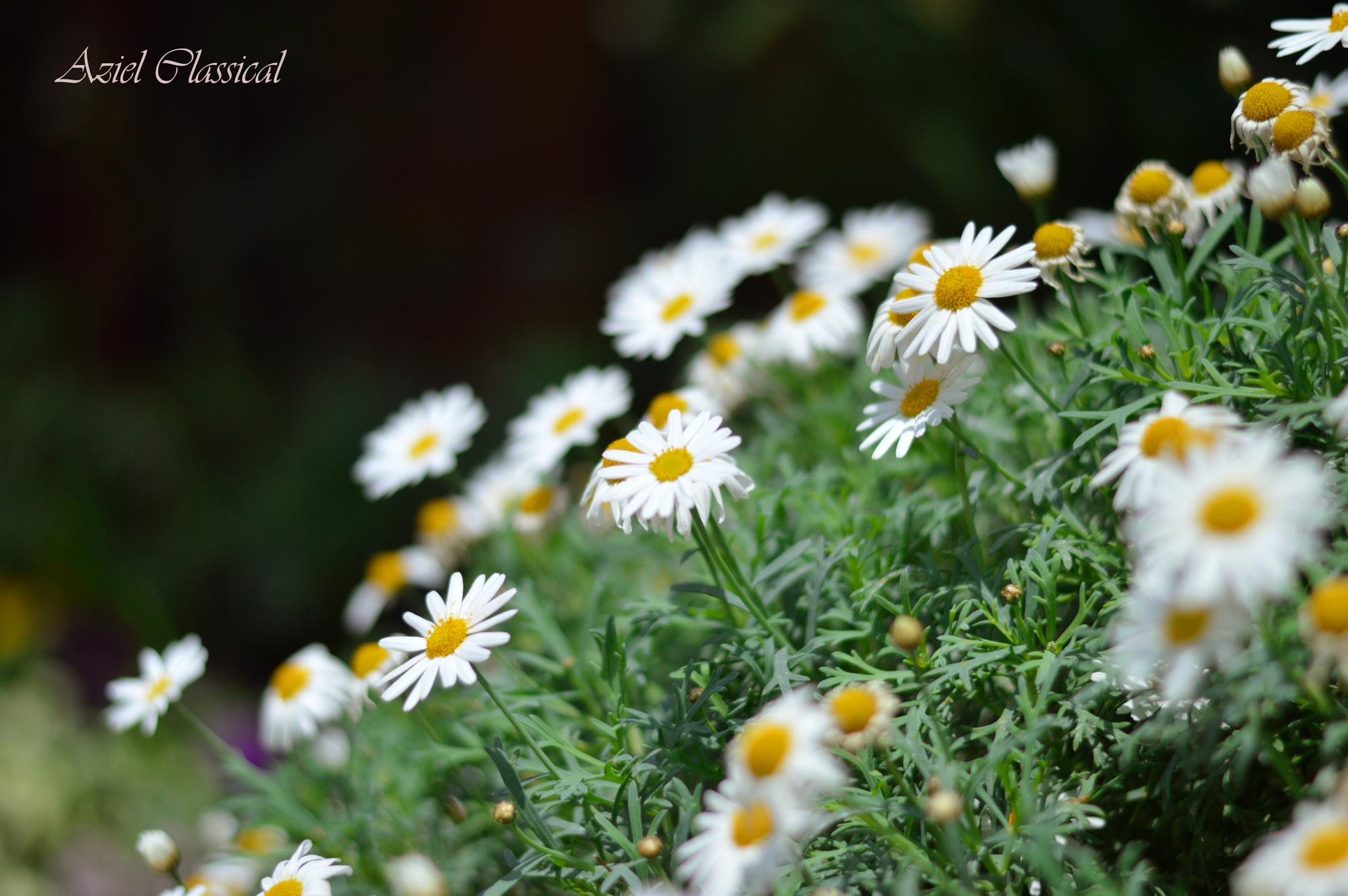 beautifull flower by eko.prasetyo