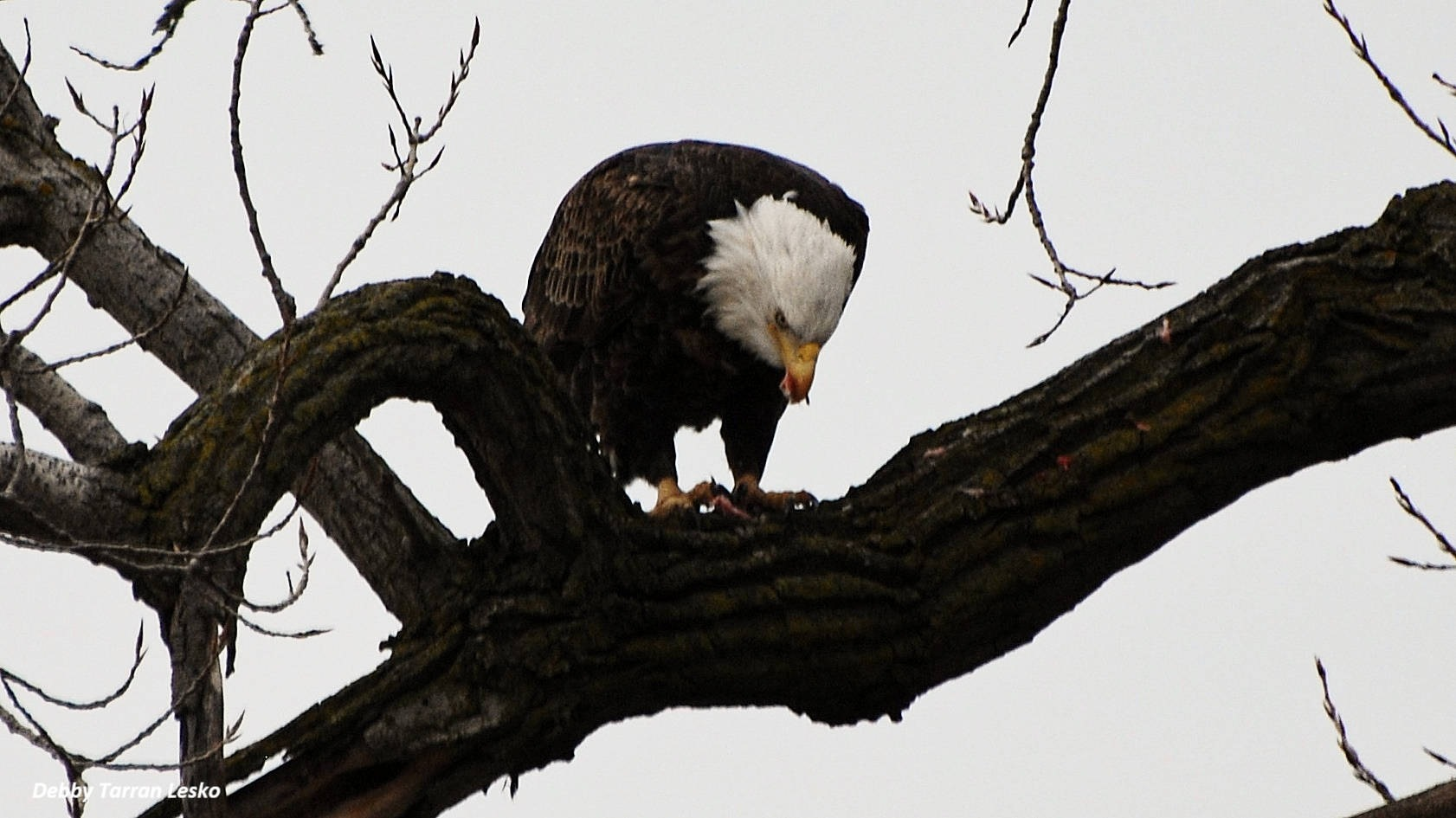 Photo in Random #eagle #thawing #river