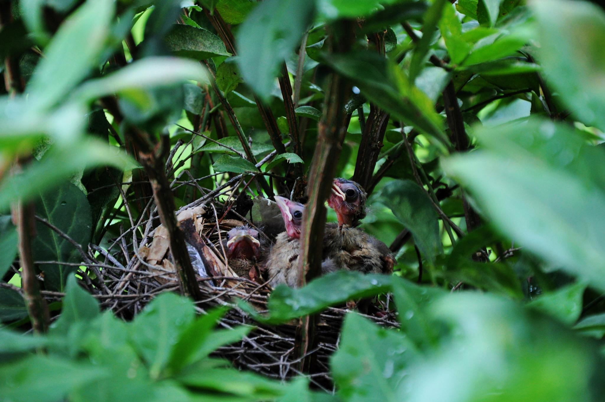 Nest by debbylesko