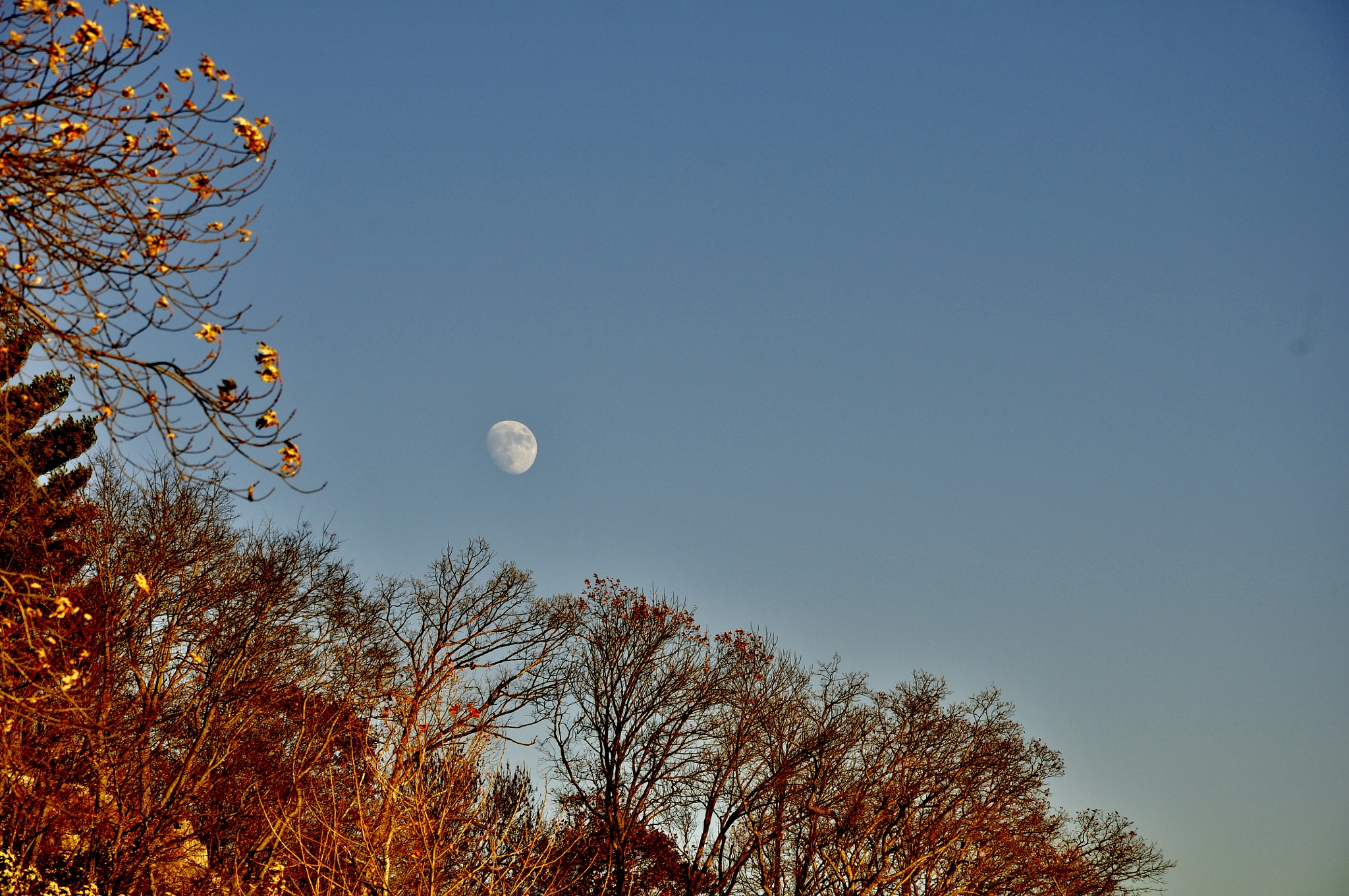 Moon during the day. by debbylesko