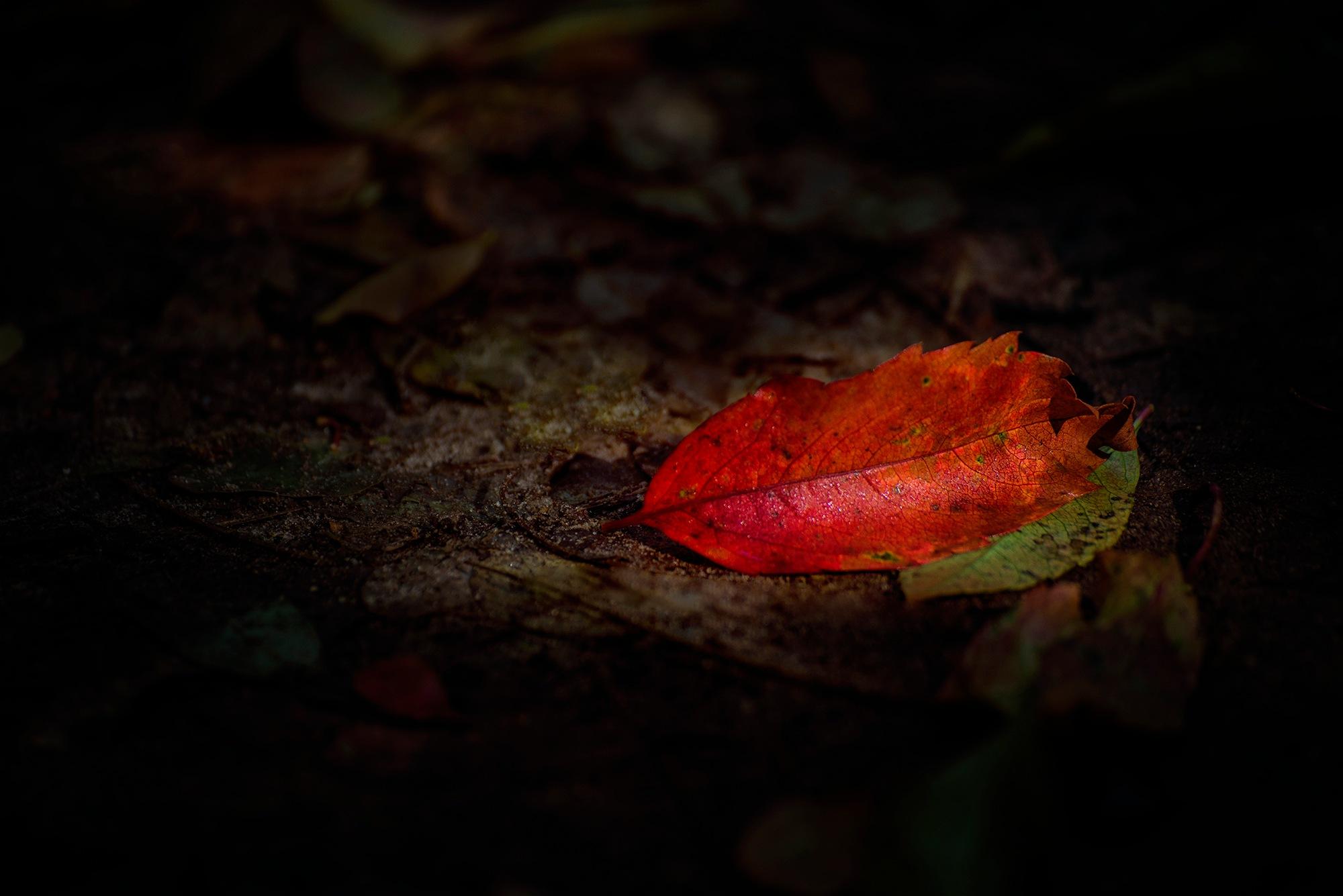 autumn by BeatrixBagdiCompositionartist