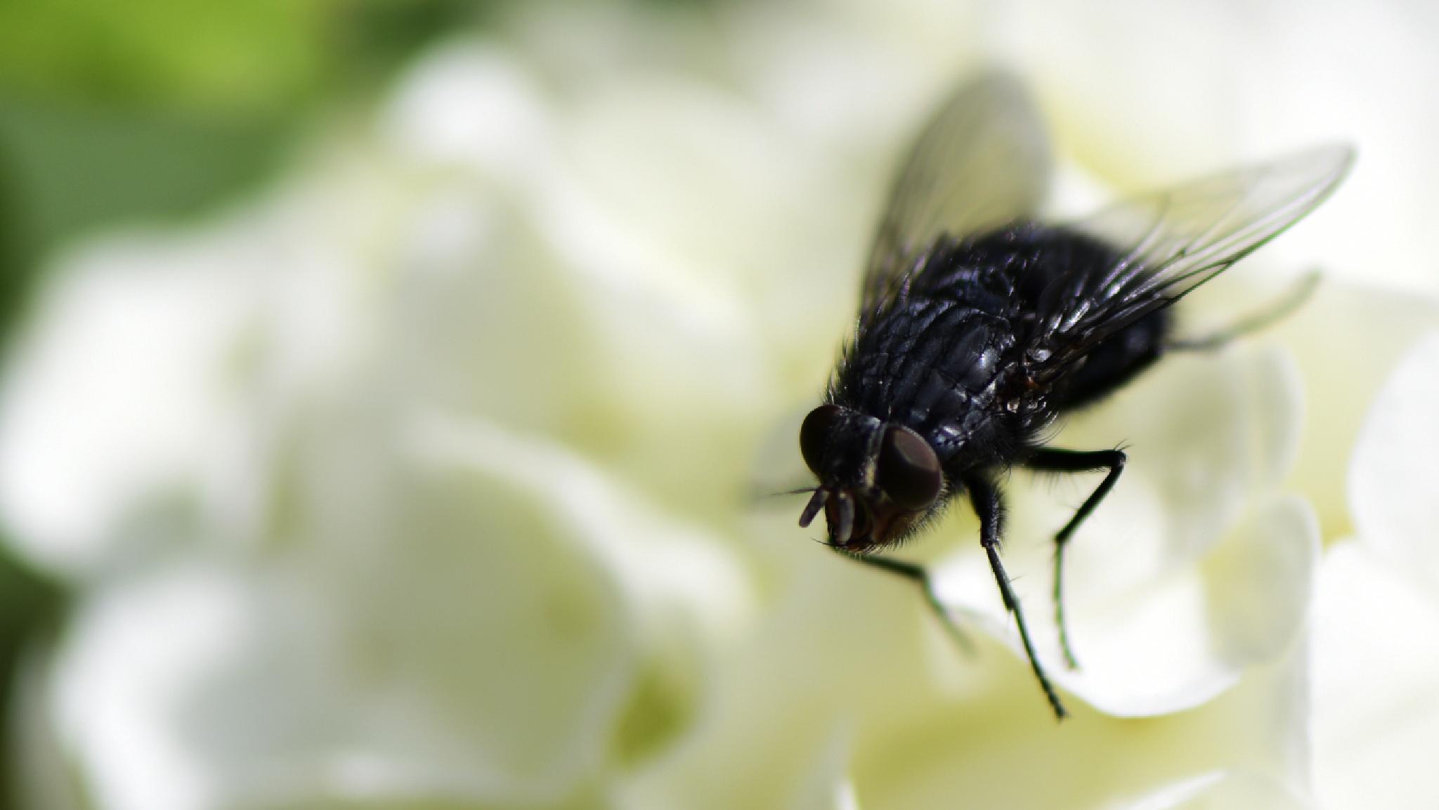 Photo in Macro #macro #insect #garden