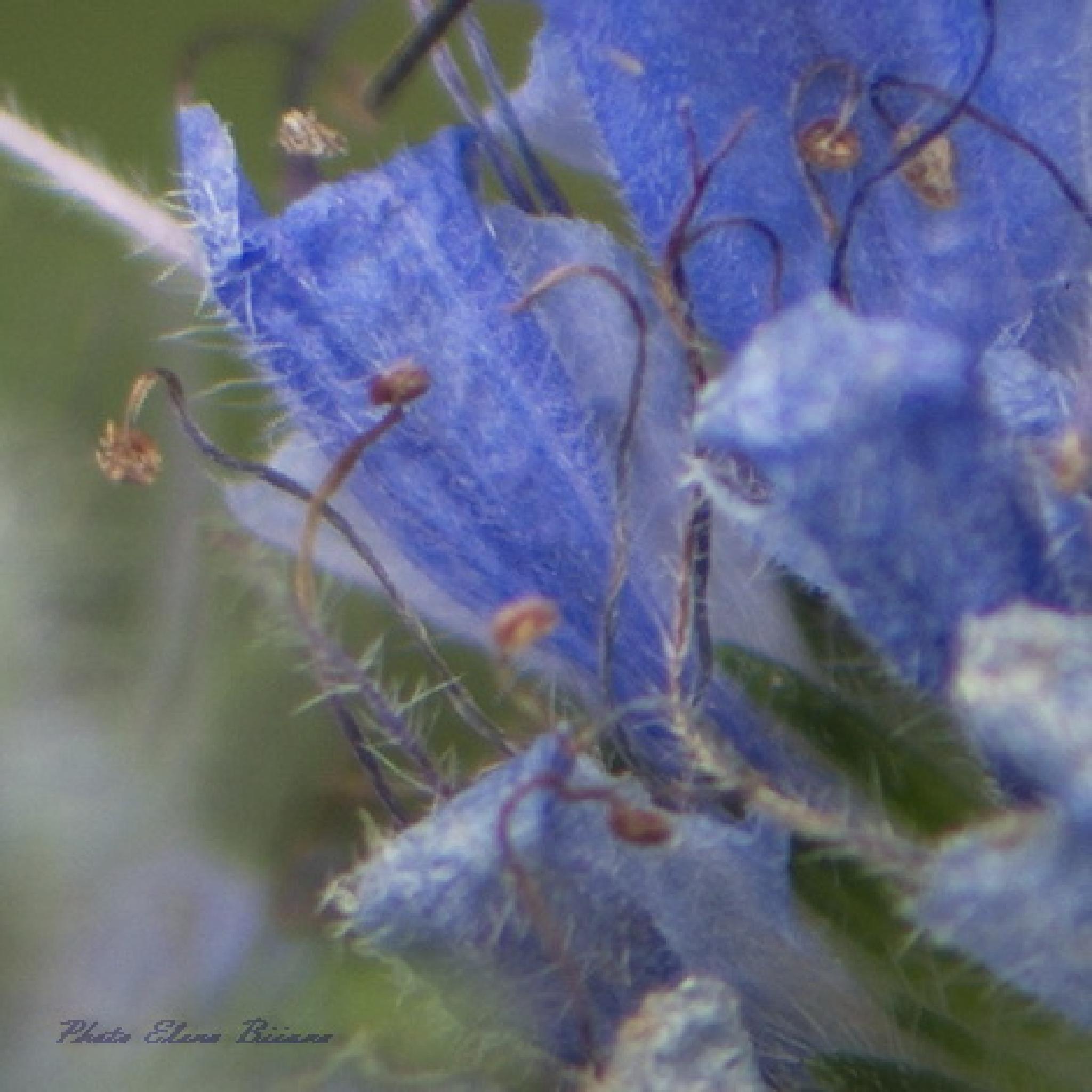 Colors of nature #2 by elena.biianu