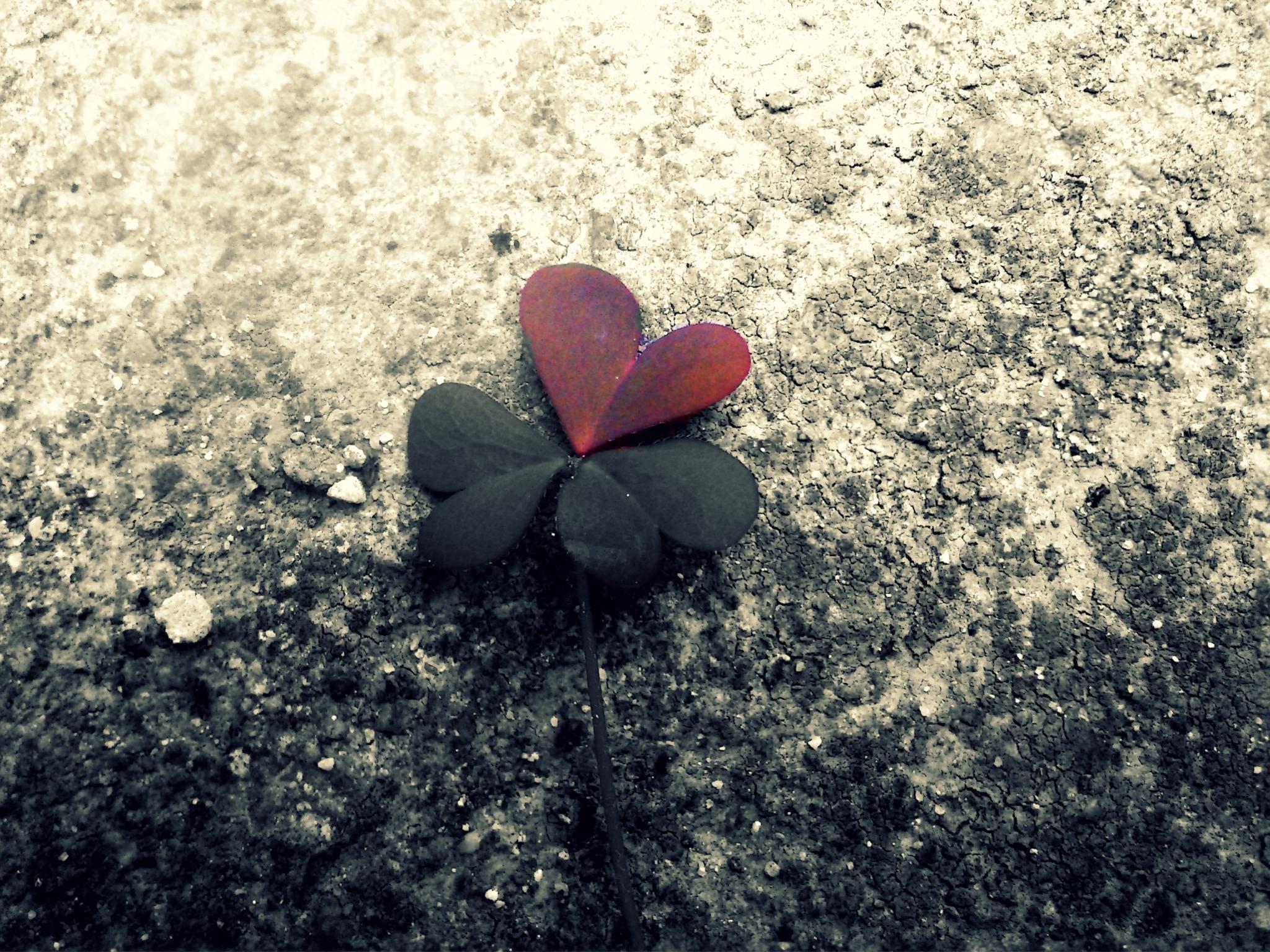 Untitled by Jelena