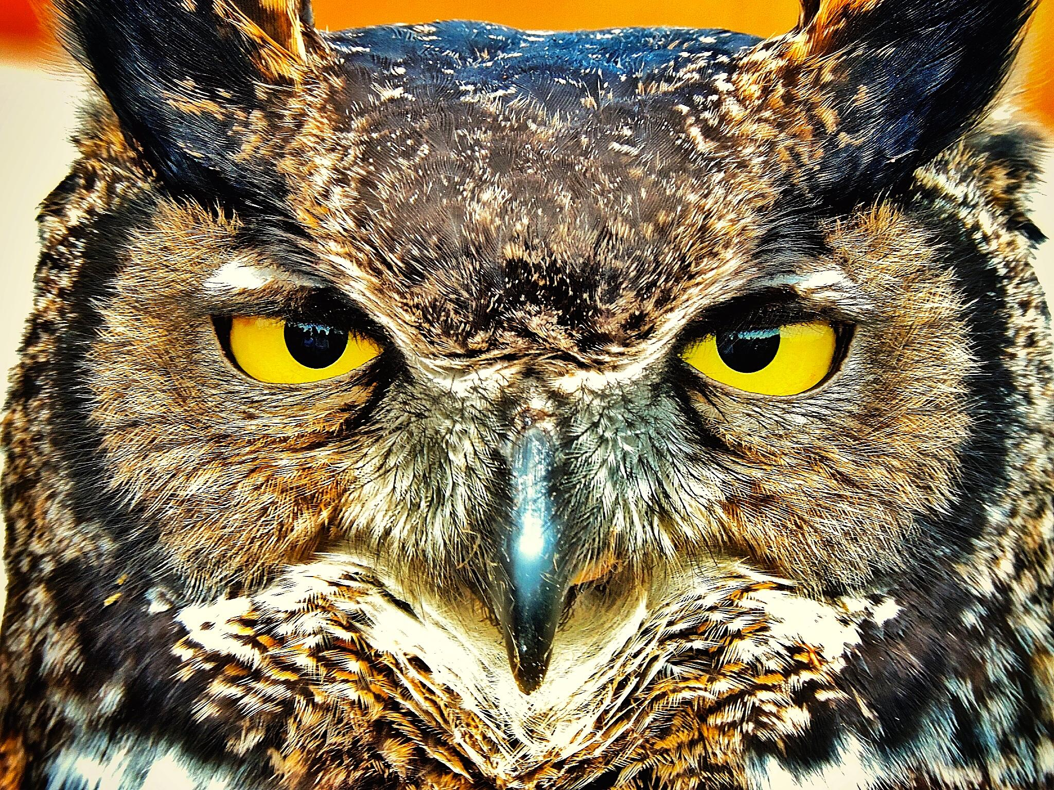 Owl by kent.otterdahl