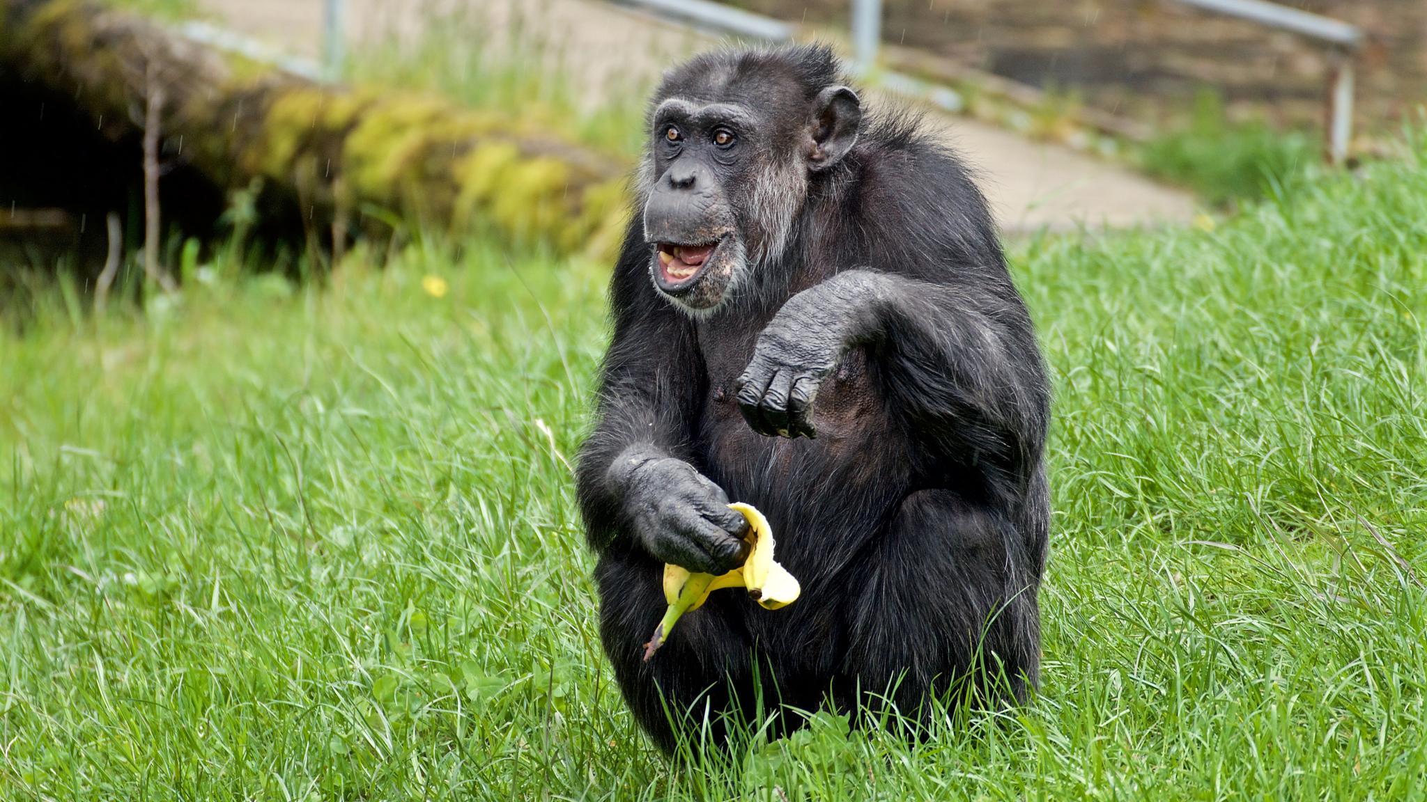 Happy ape. by kent.otterdahl