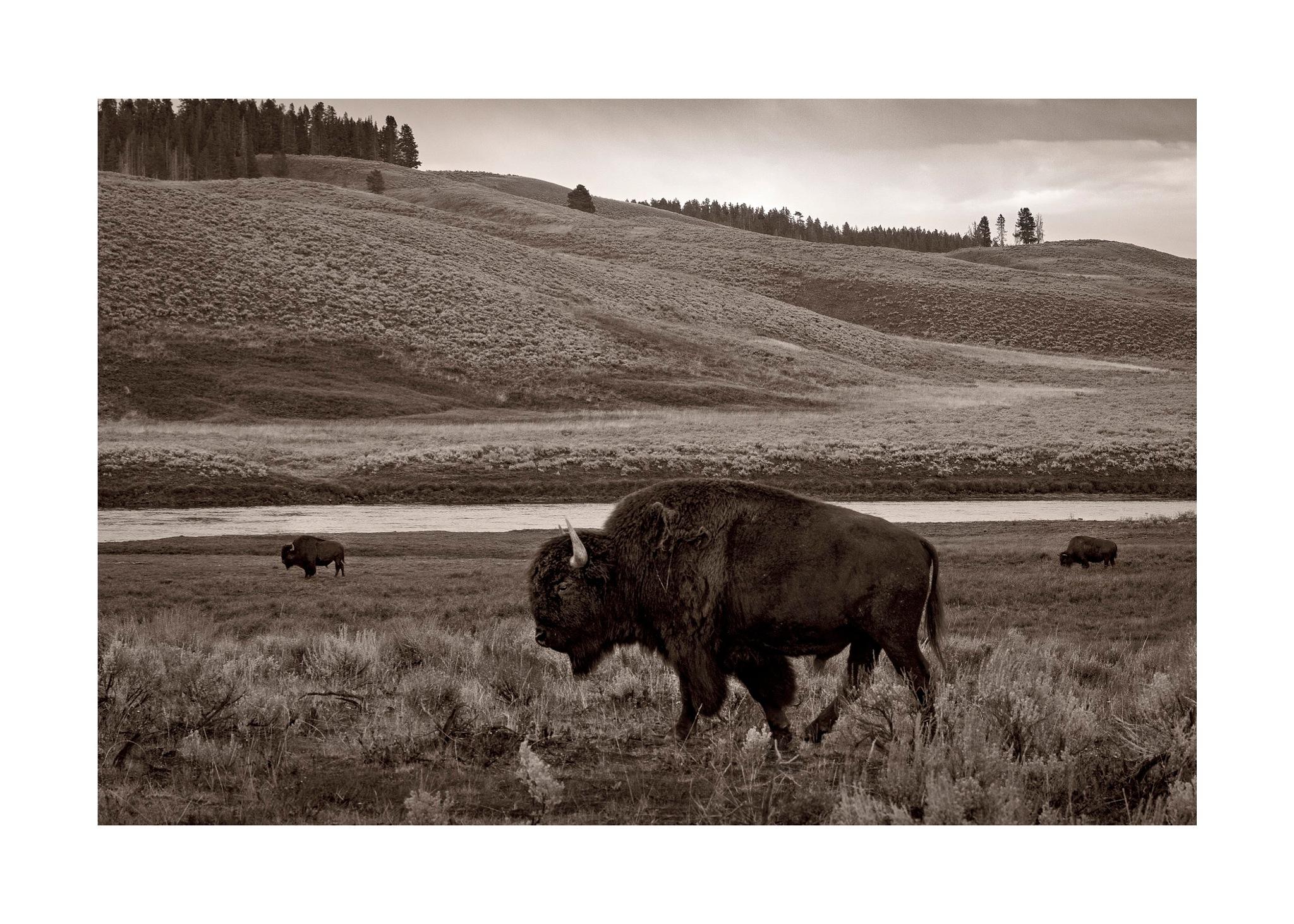 Yellowstone Icon by jhulton