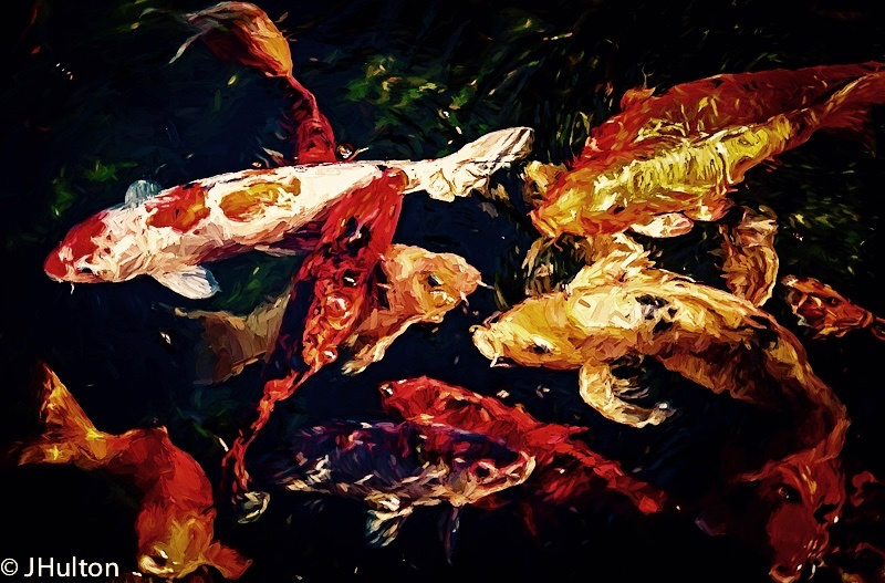 Koi Pond by jhulton