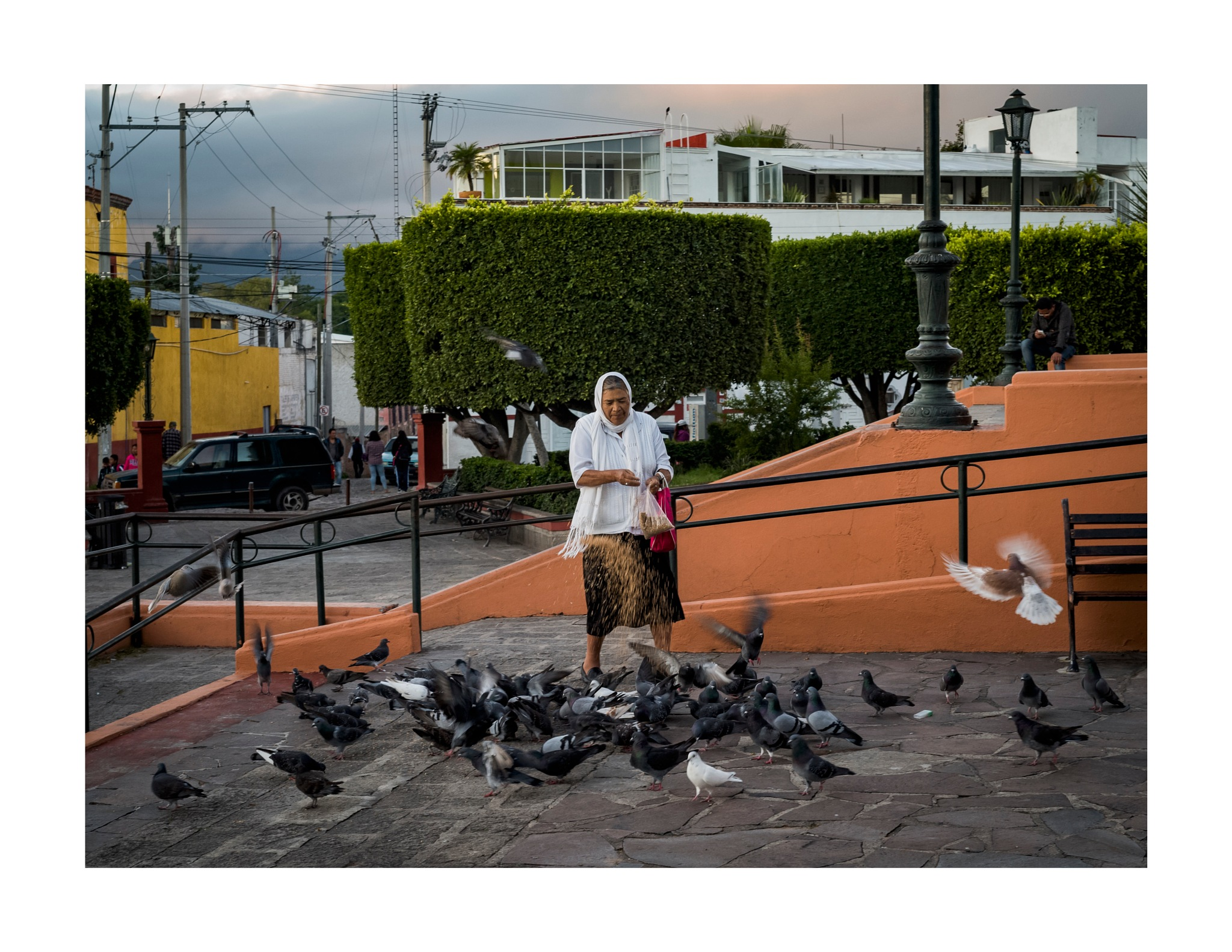 Pigeon Whisperer by jhulton