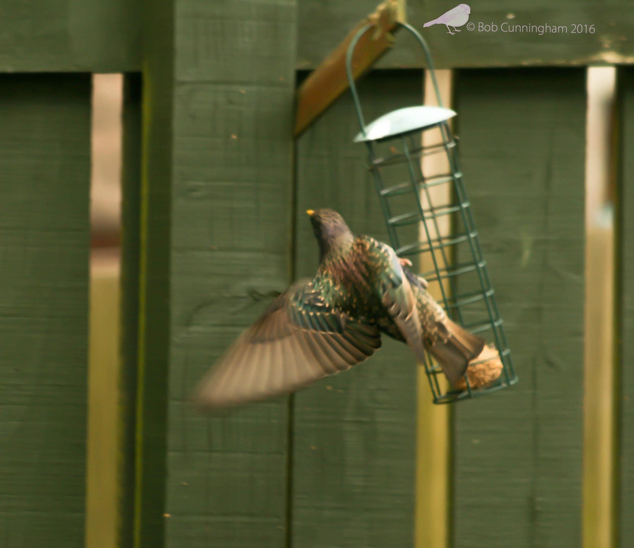 Photo in Nature #bird #feeder #feathers #wings #yellow beak